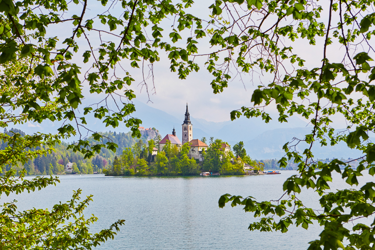 Lake Bled Church and Castle Through Trees in Slovenia
