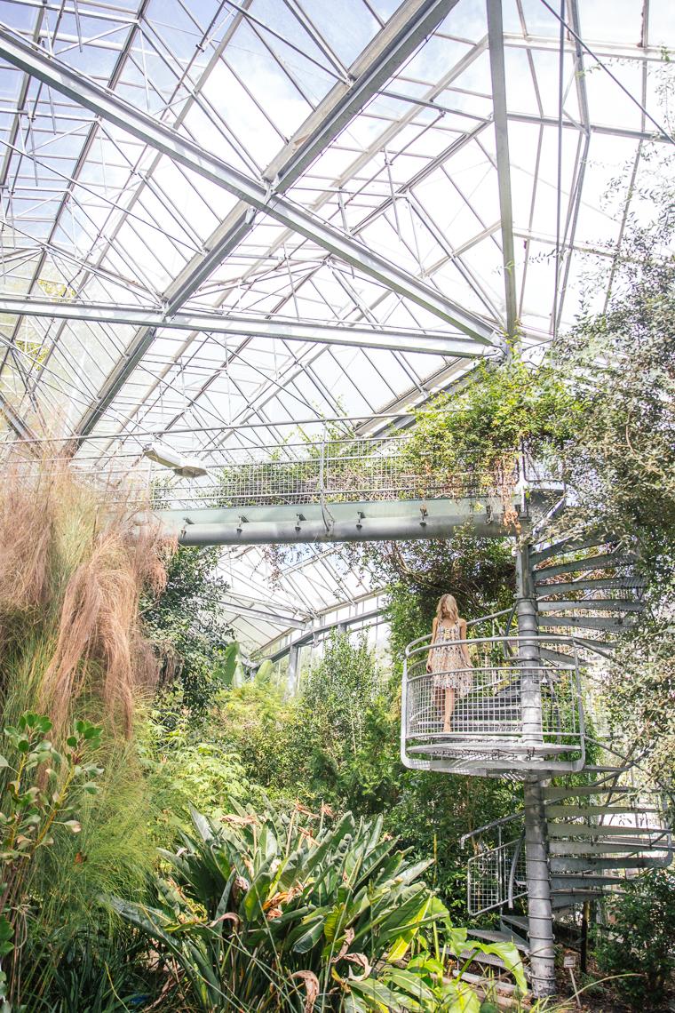 climbing stairs in greenhouse hortus botanicus botanical gardens Amsterdam