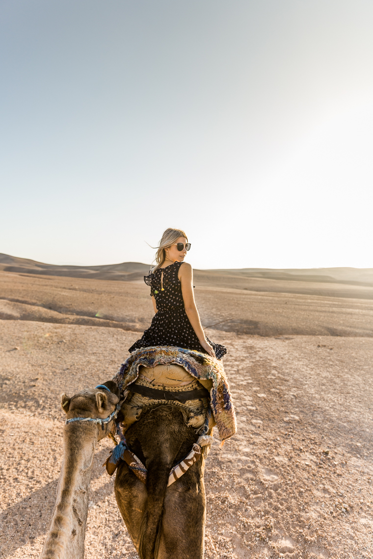 Camel views in Morocco via @FindUsLost