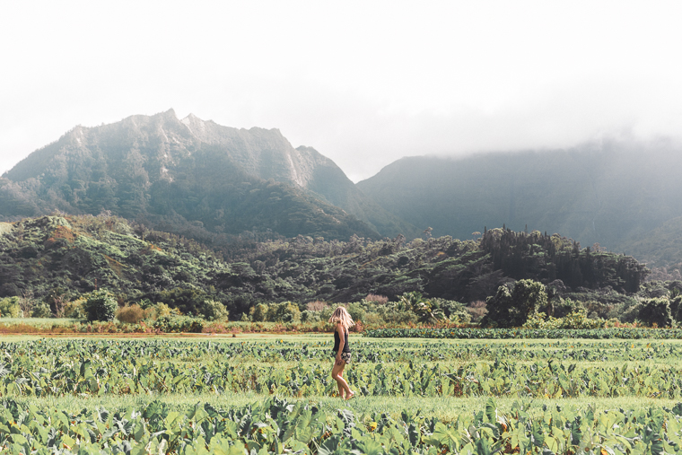 Taro Fields in Hanalei Hawaii - Kauai Travel Guide via Find Us Lost