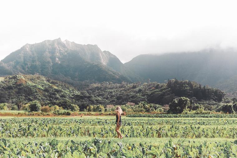 Taro Fields in Hanalei Hawaii - Kauai Travel Guide via Find Us Lost