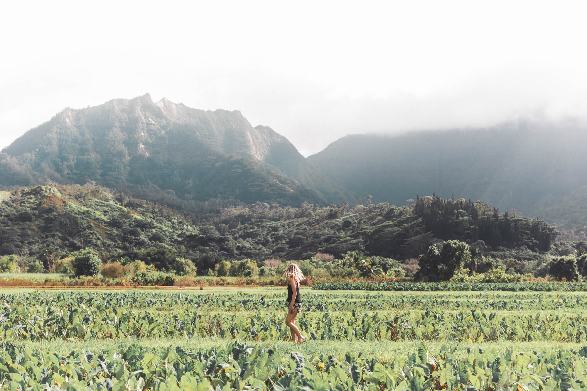 Taro Fields in Hanalei Hawaii Landscape Kauai Travel Guide via Find Us Lost