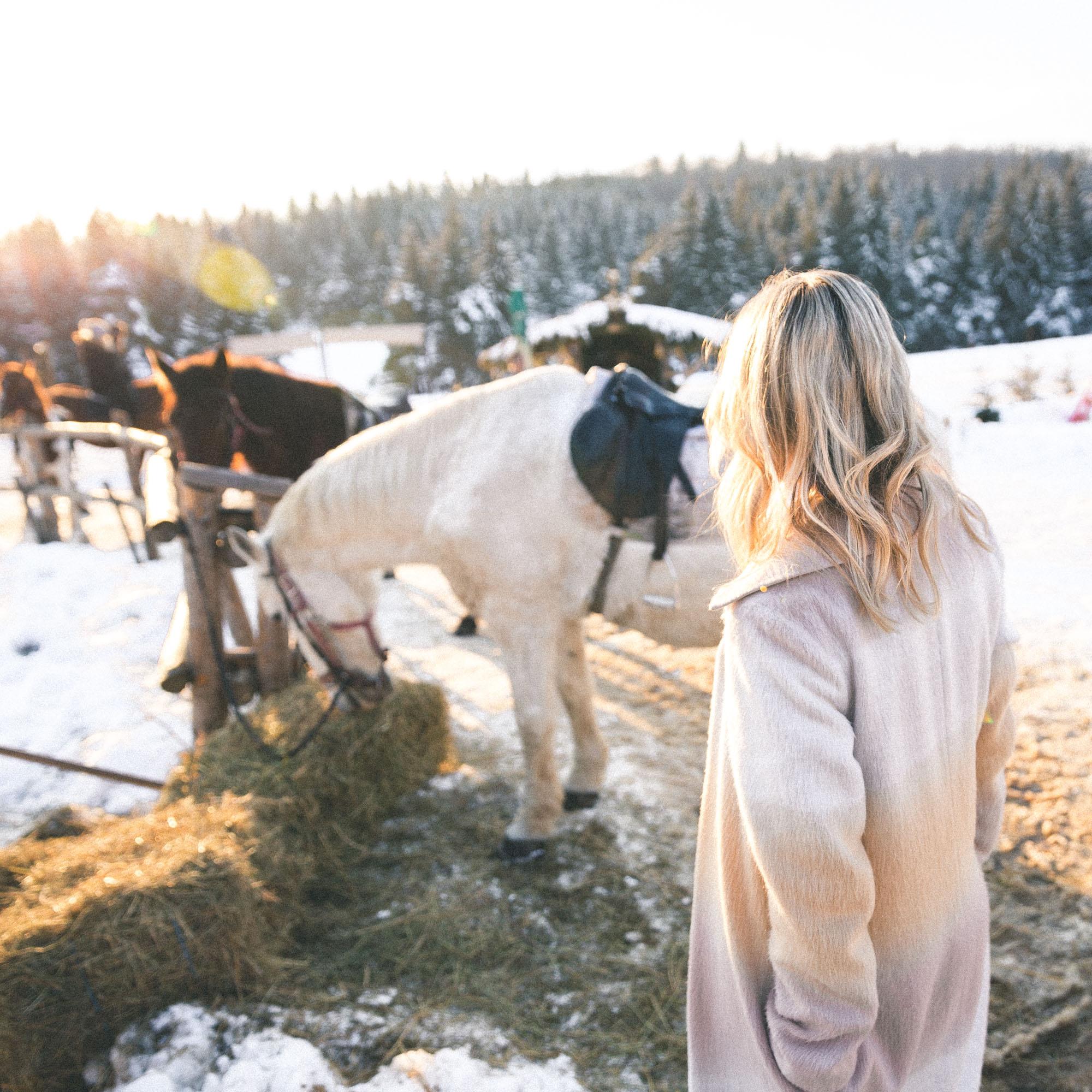 Horses in Romania via Find Us Lost
