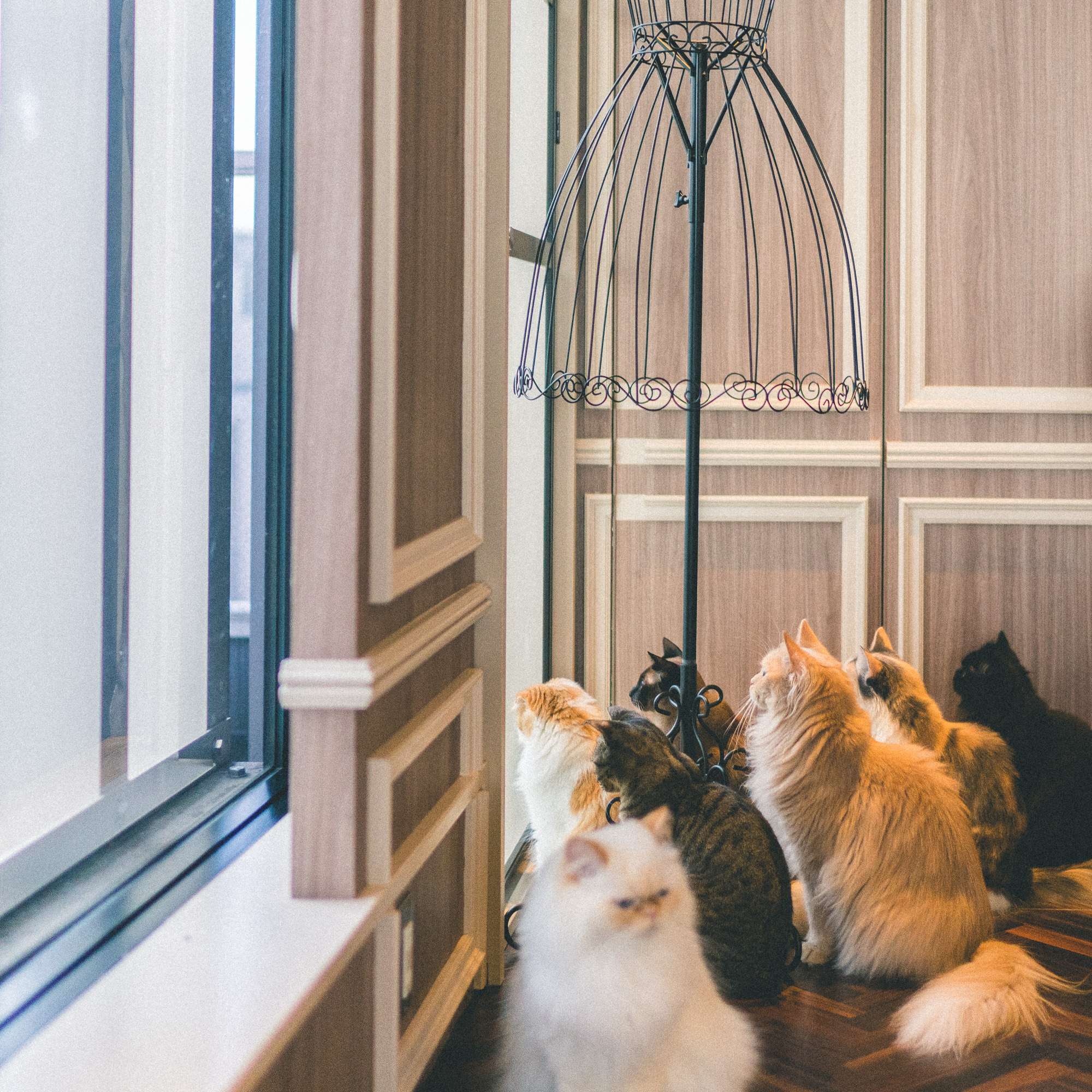 The Complete Tokyo Travel Guide | City Guides | Japan Travel Itinerary | Shinjuku Shibuya Harujuku Neighborhood Travel Tips | Cat Cafe Mocha