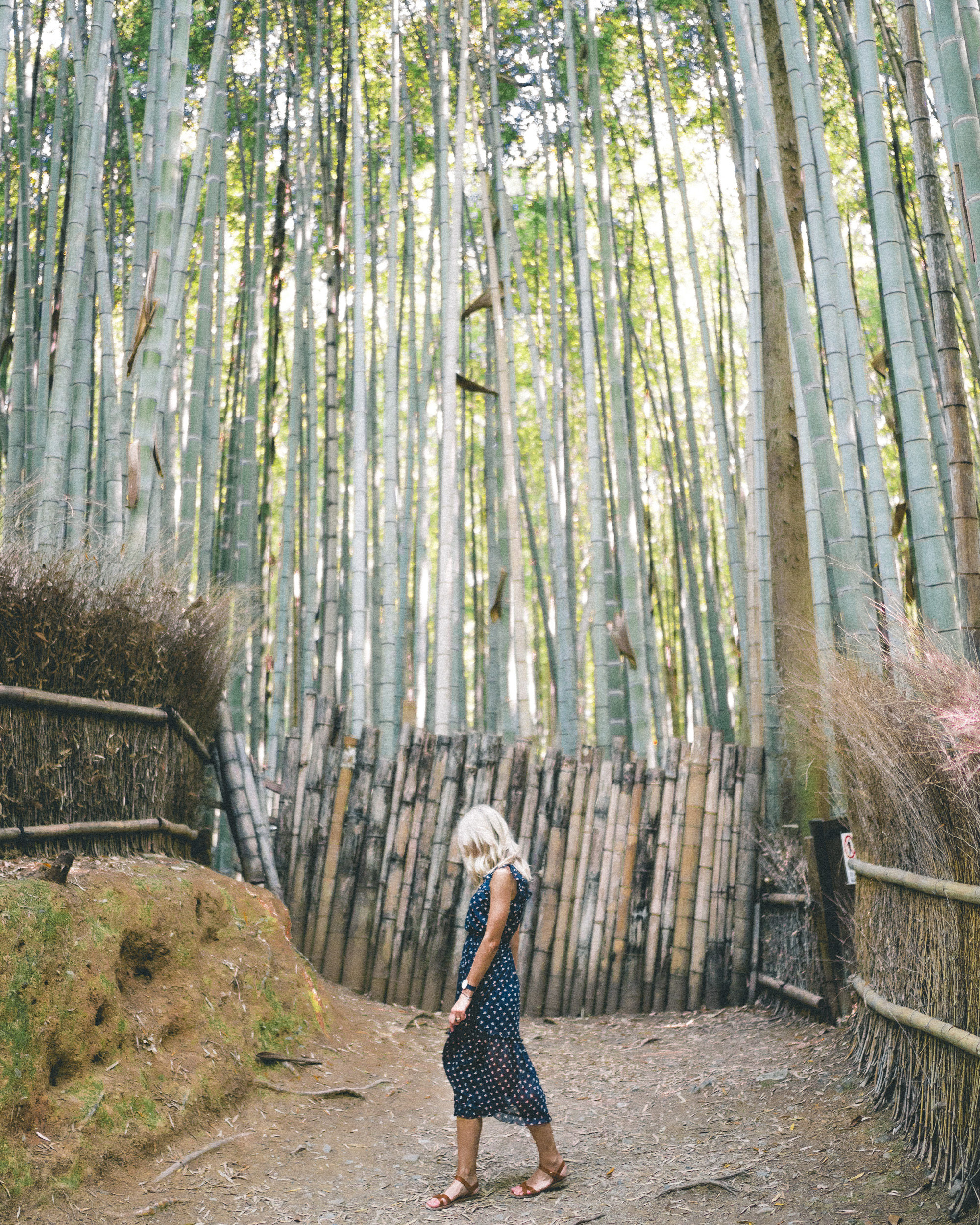 Arashiyama Bamboo Grove in Kyoto, Japan | 24 Hour Guide to Kyoto, Japan | 1 Day Guide Kyoto | Kyoto City Guide | Kyoto Travel Itinerary