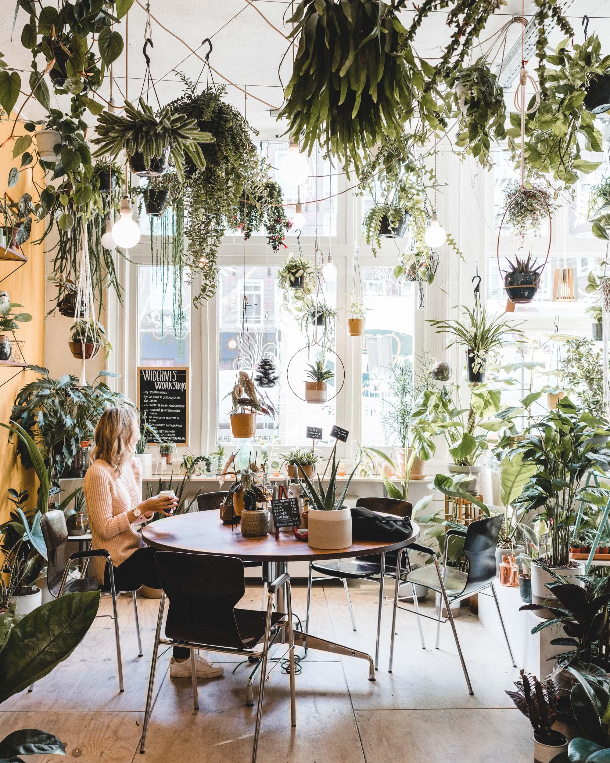 Wildernes plant store in Amsterdam's Jordaan district, Holland, The Netherlands