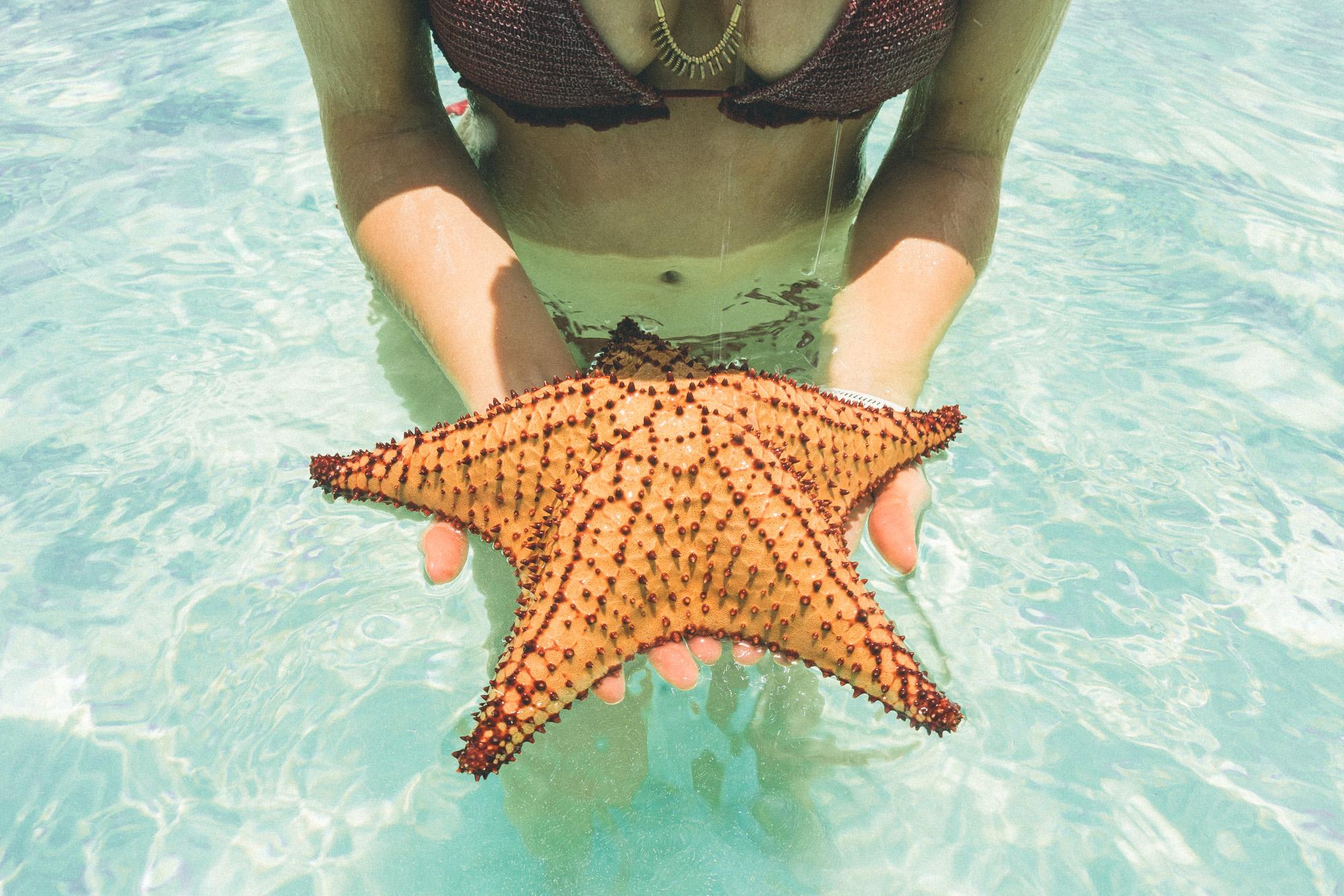 Starfish near Saona Island, Dominican Republic | Clear Blue Water in Punta Cana | Tropical Paradise Beach Getaways in the Caribbean | Islands Near North America