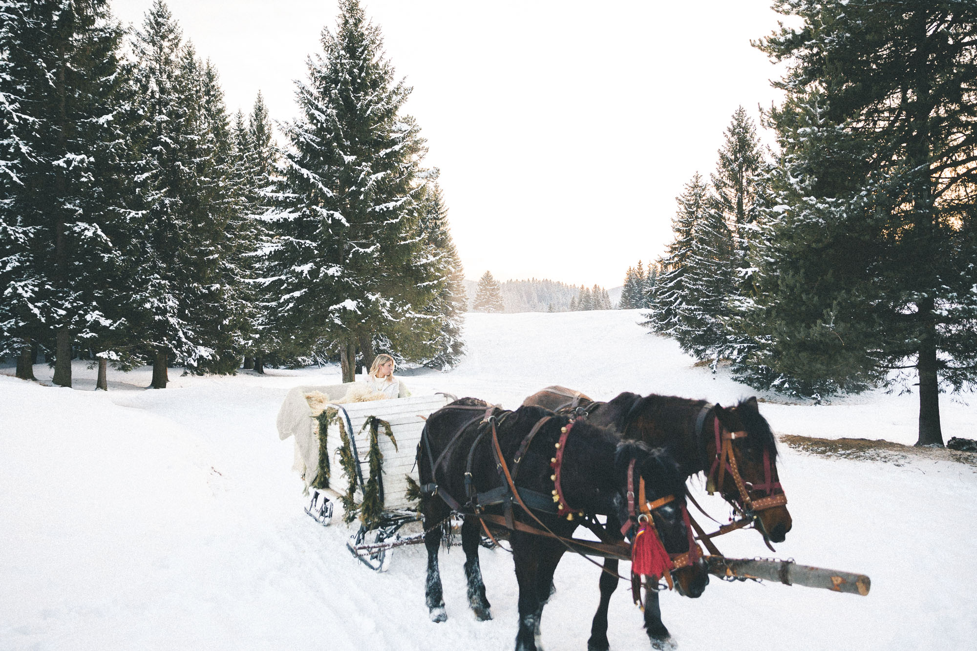 Horse-drawn sleigh ride in Poiana Brasov, Transylvania, Romania
