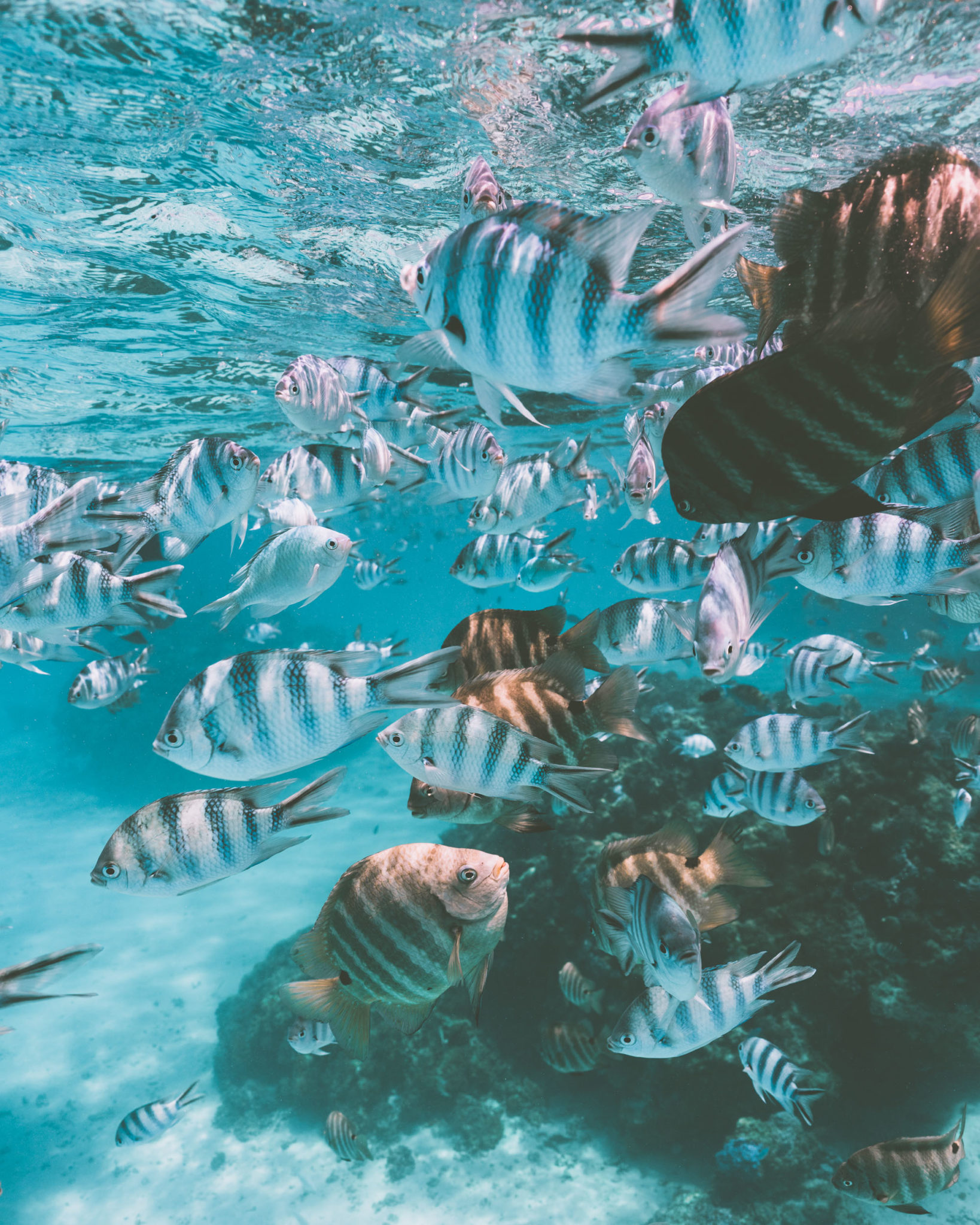 Underwater coral reefs at Four Seasons Bora Bora in Tahiti for our honeymoon via @finduslost