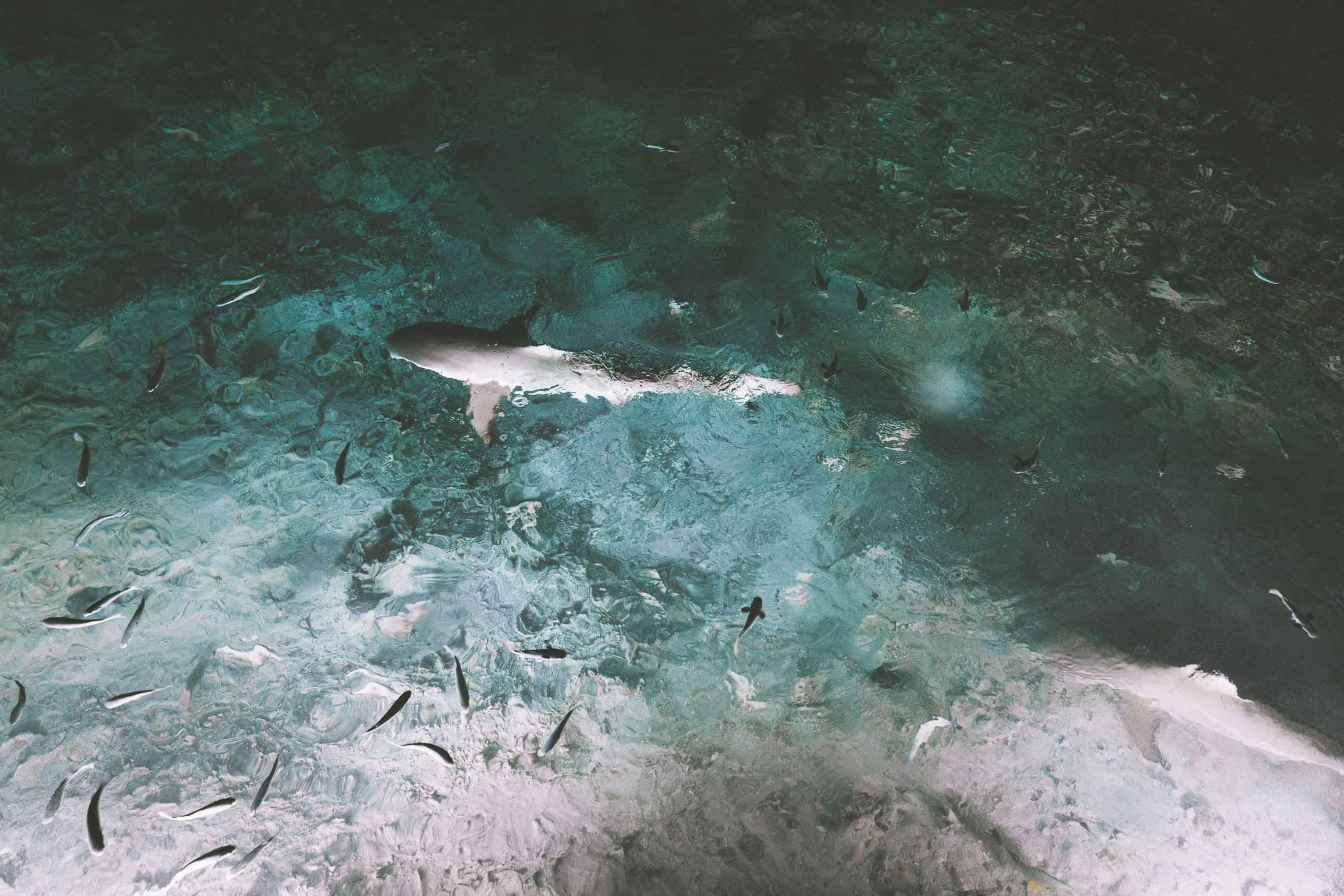 Sharks at night at Vahine Island in Tahiti
