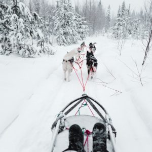 dog sledding husky safari in lapland finland