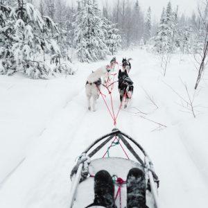 dog sledding husky safari in lapland finland