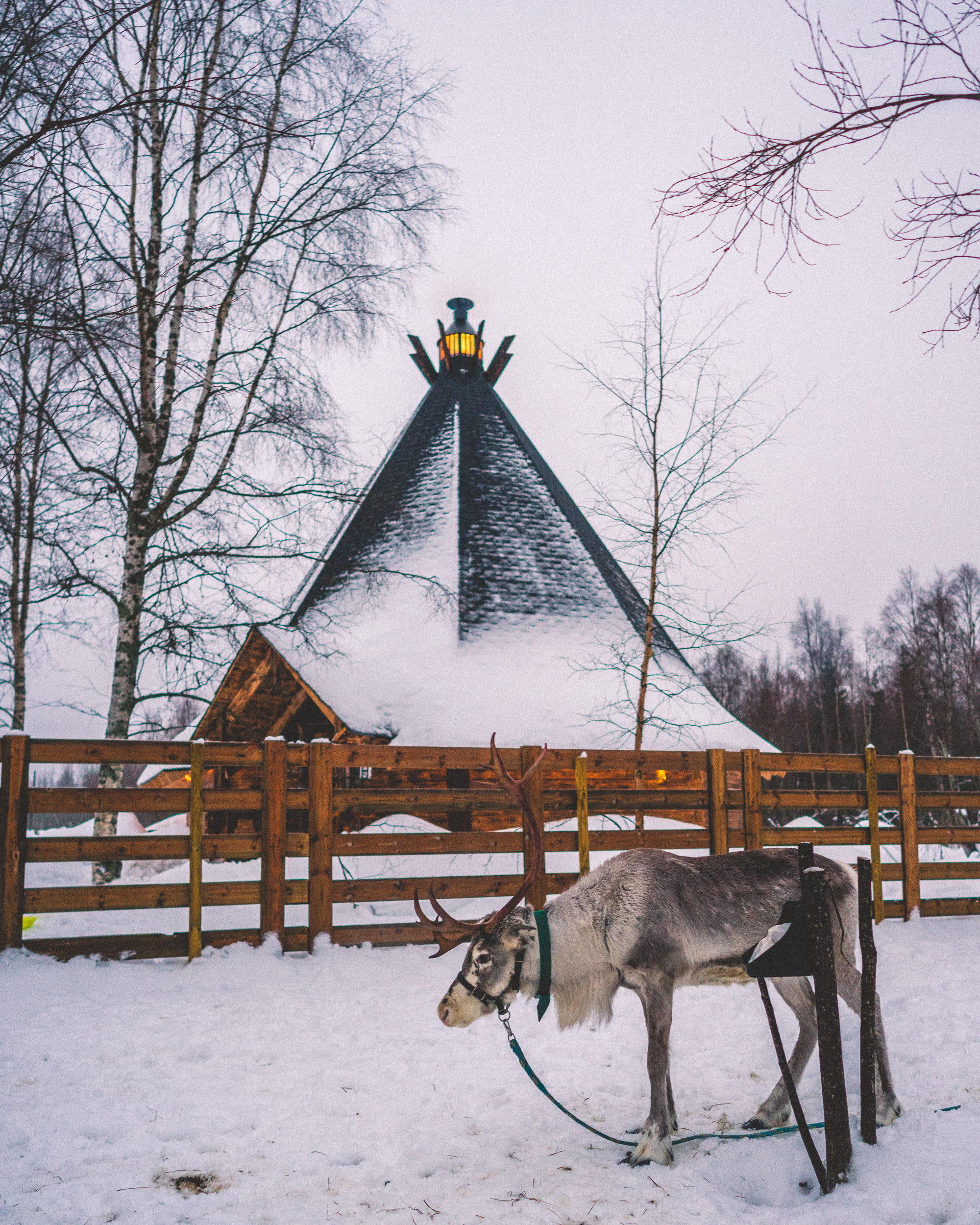 finnish hut and reindeer in kemi lapland finland