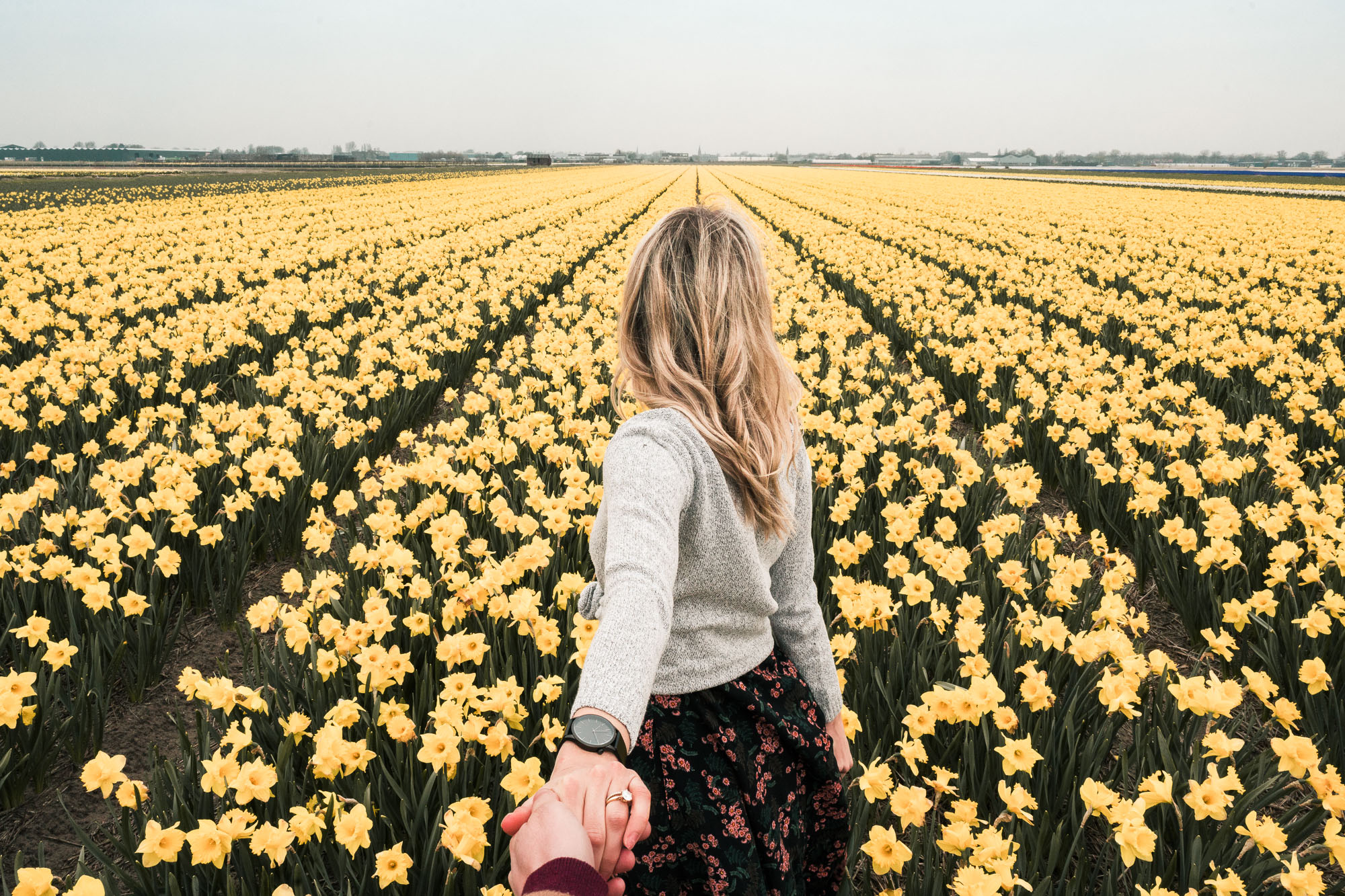 Flower fields in lisse keukenhof tulip season in the netherlands day trip amsterdam travel blogger selena taylor find us lost