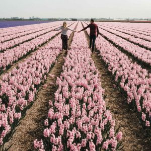 Flower fields in lisse keukenhof tulip season in the netherlands day trip amsterdam travel bloggers selena and jacob taylor find us lost