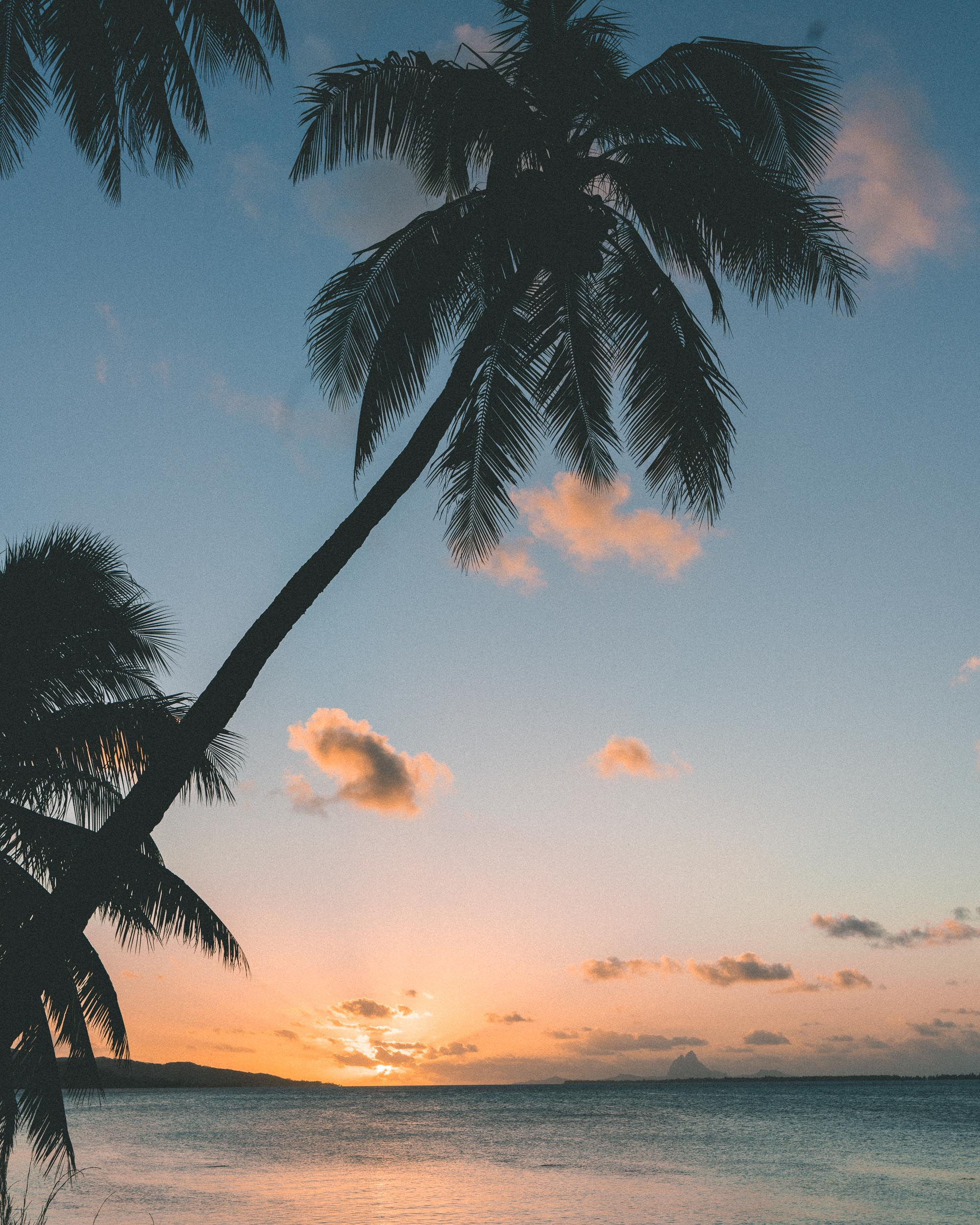 Palm trees at sunset in tahiti french polynesia Find Us Lost