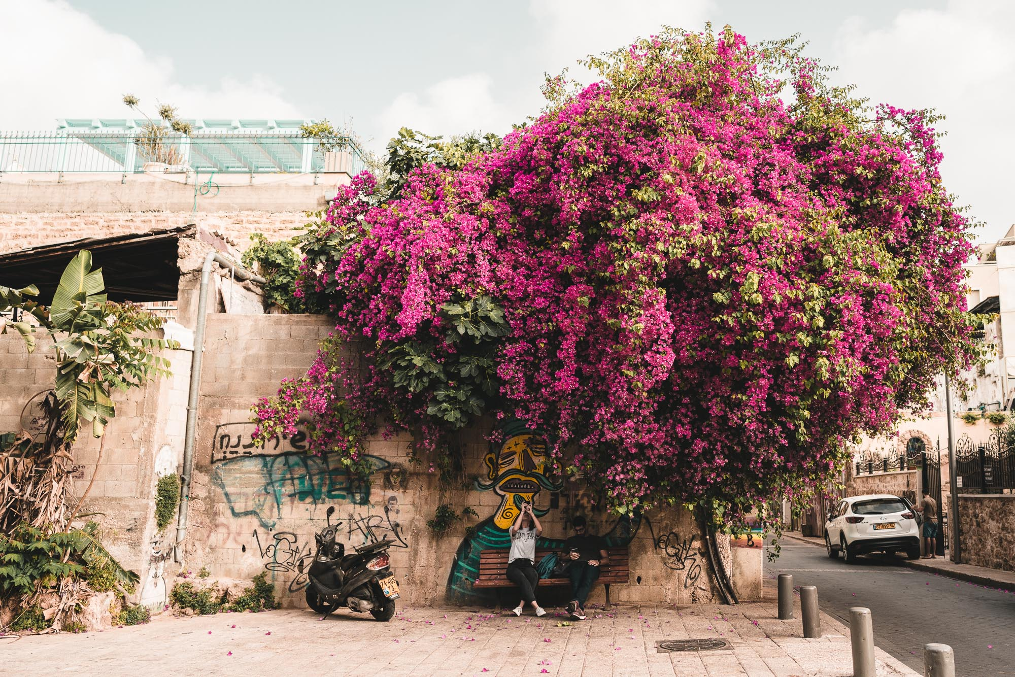Bougainvillea in the streets of Jaffa in Tel Aviv, Israel