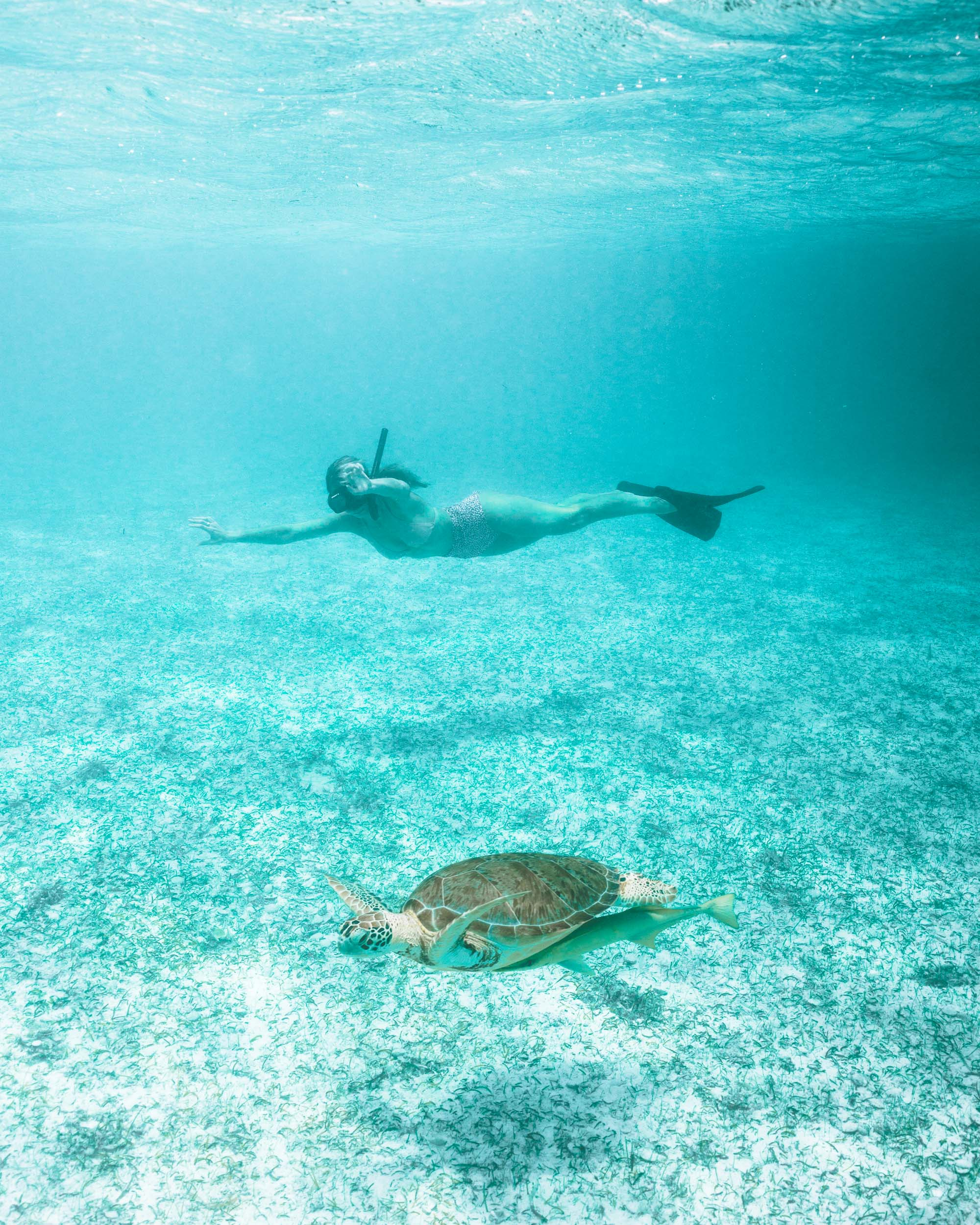 Swimming with turtles at turtle cay near a deserted island in Nassau Bahamas