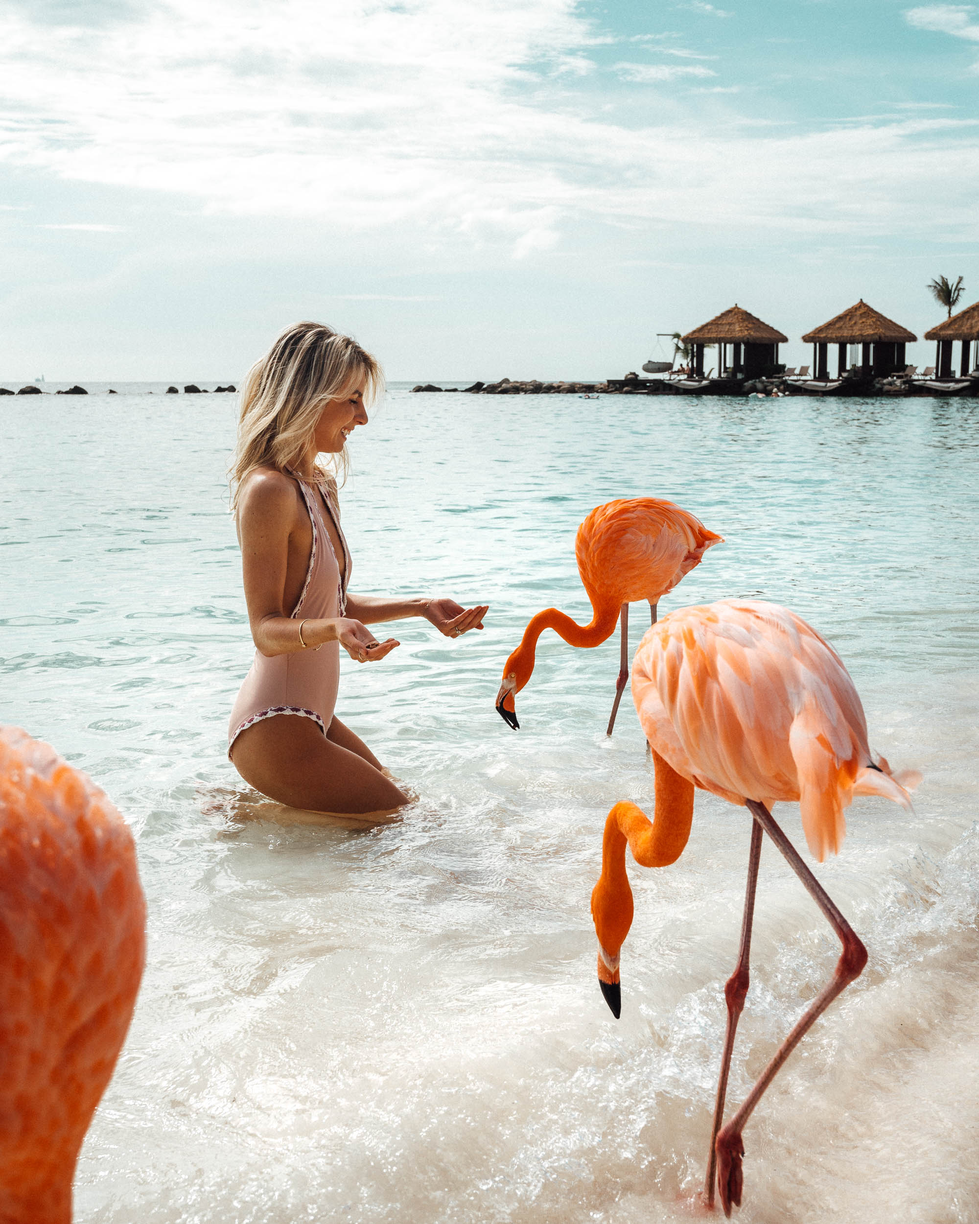 Feeding the flamingos in Aruba via Find Us Lost