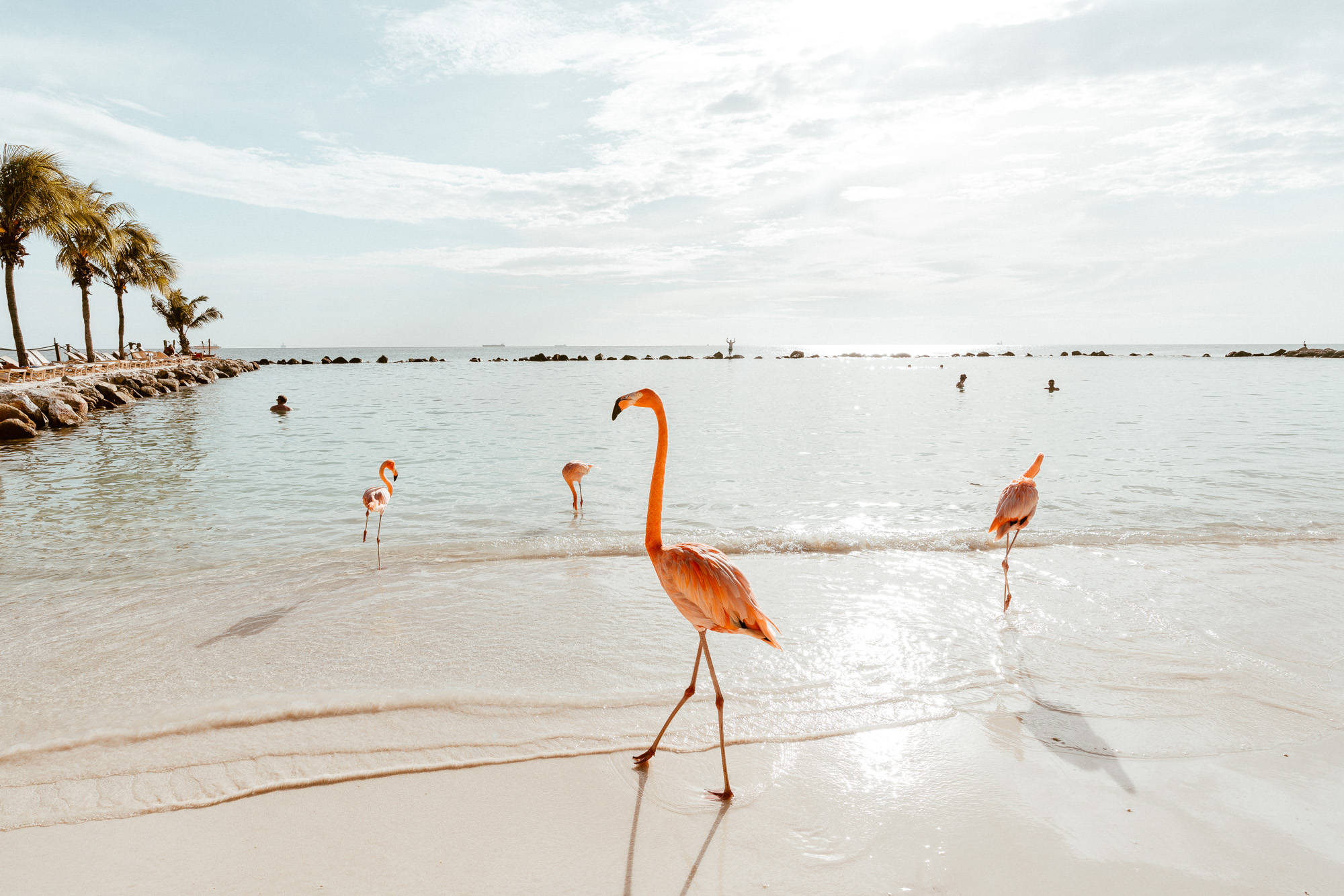 Flamingos on the beach in Aruba via Find Us Lost