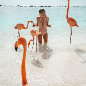 Feeding the flamingos in Aruba via Find Us Lost