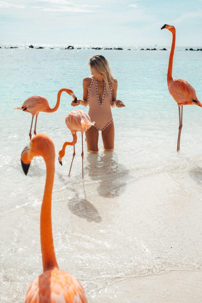The Complete Aruba Travel Guide