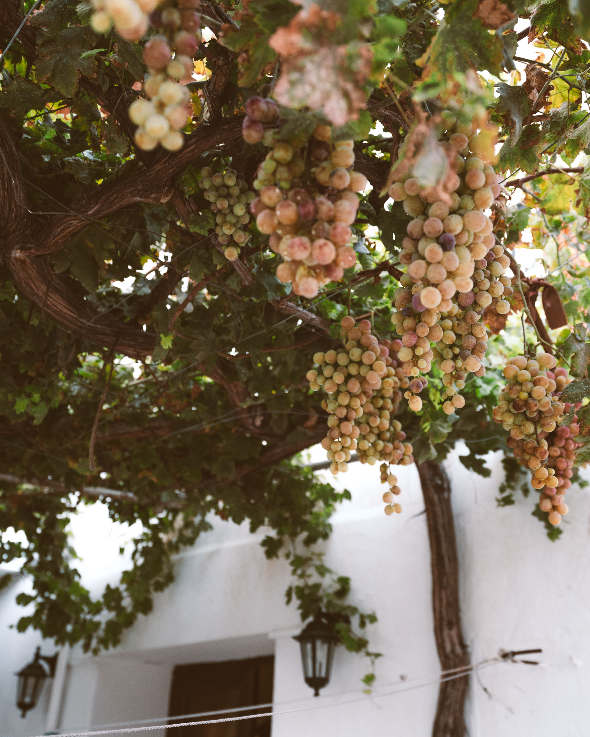 Grapes in Omodos Village Cyprus via @finduslost