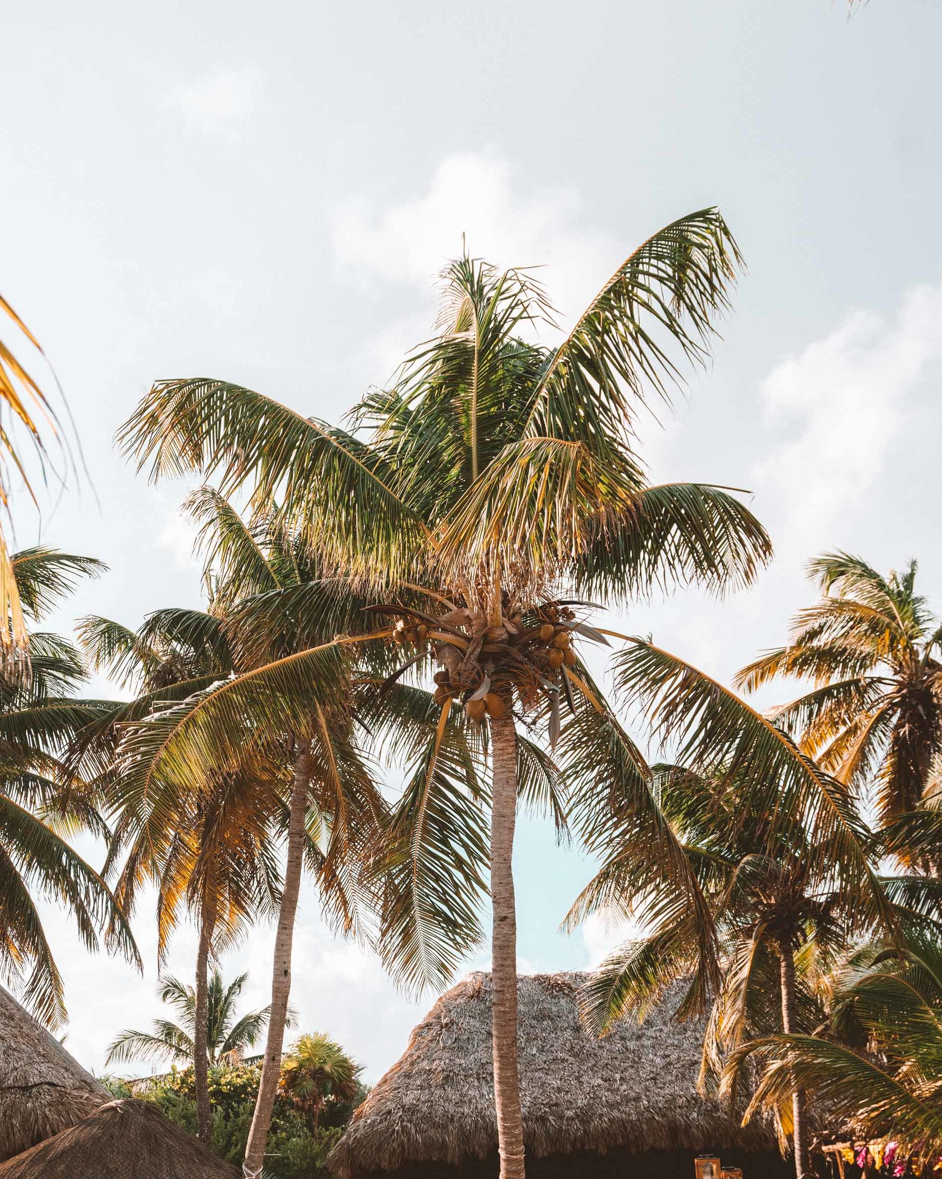 Palm trees in Tulum Mexico via Find Us Lost