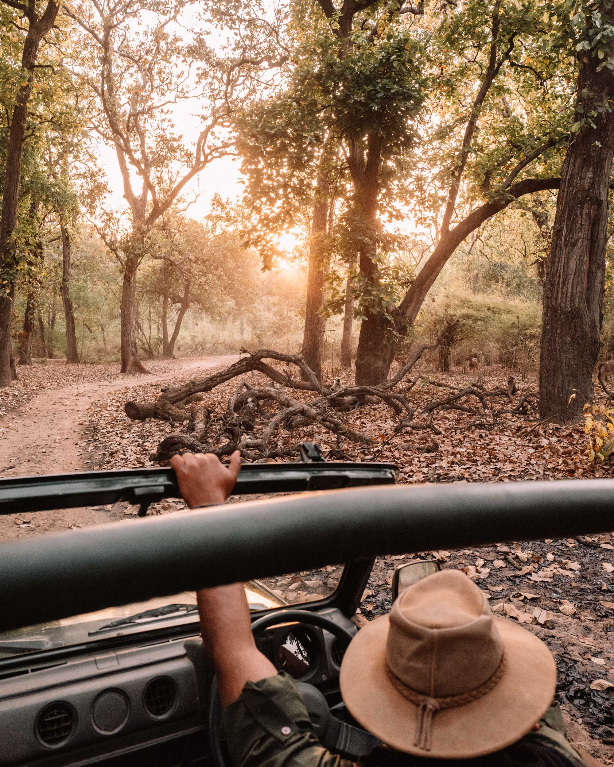 On a Tiger Safari in Ranthambore National Park, India via Find Us Lost
