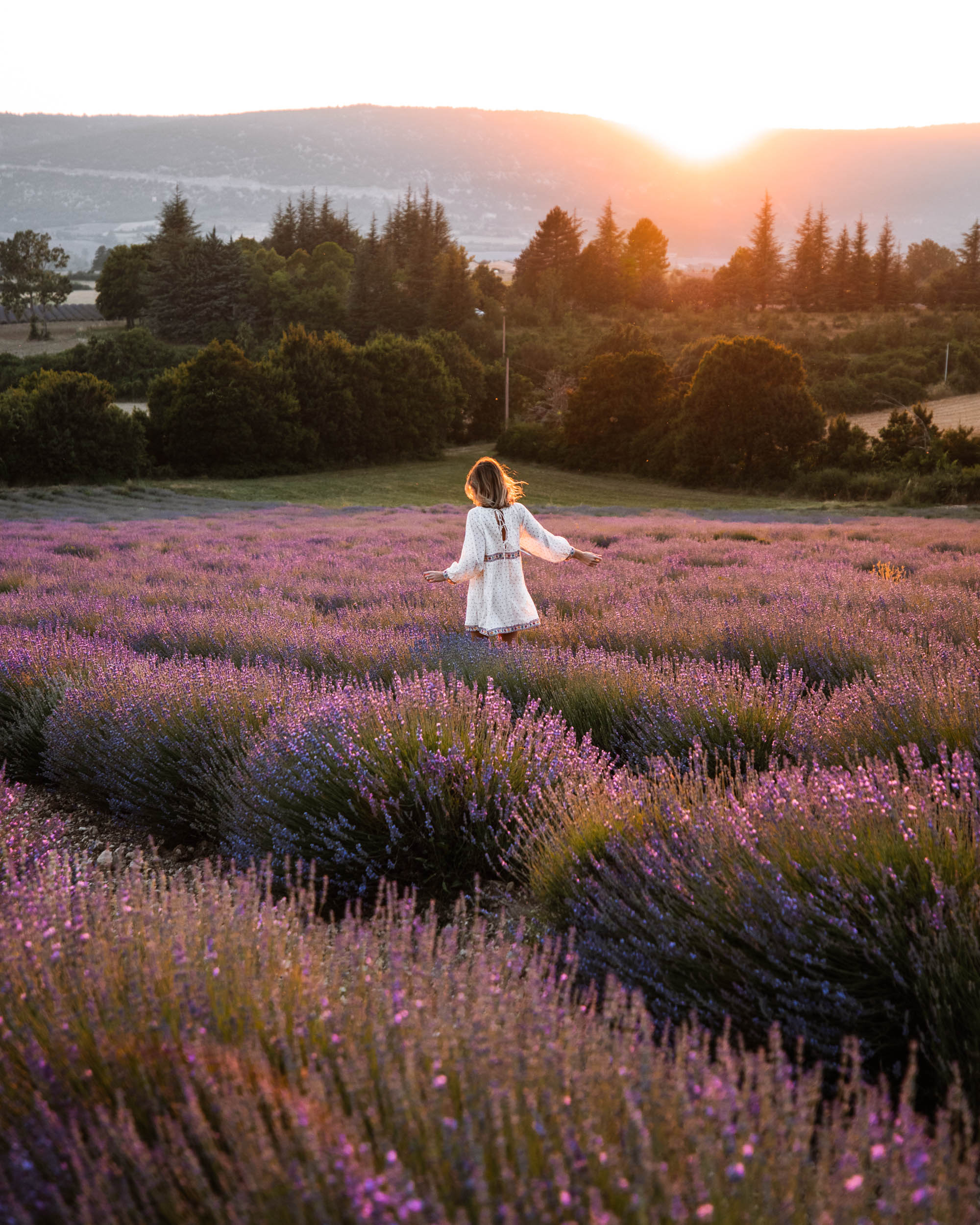 Lavender fields near Sault in Provence, South of France