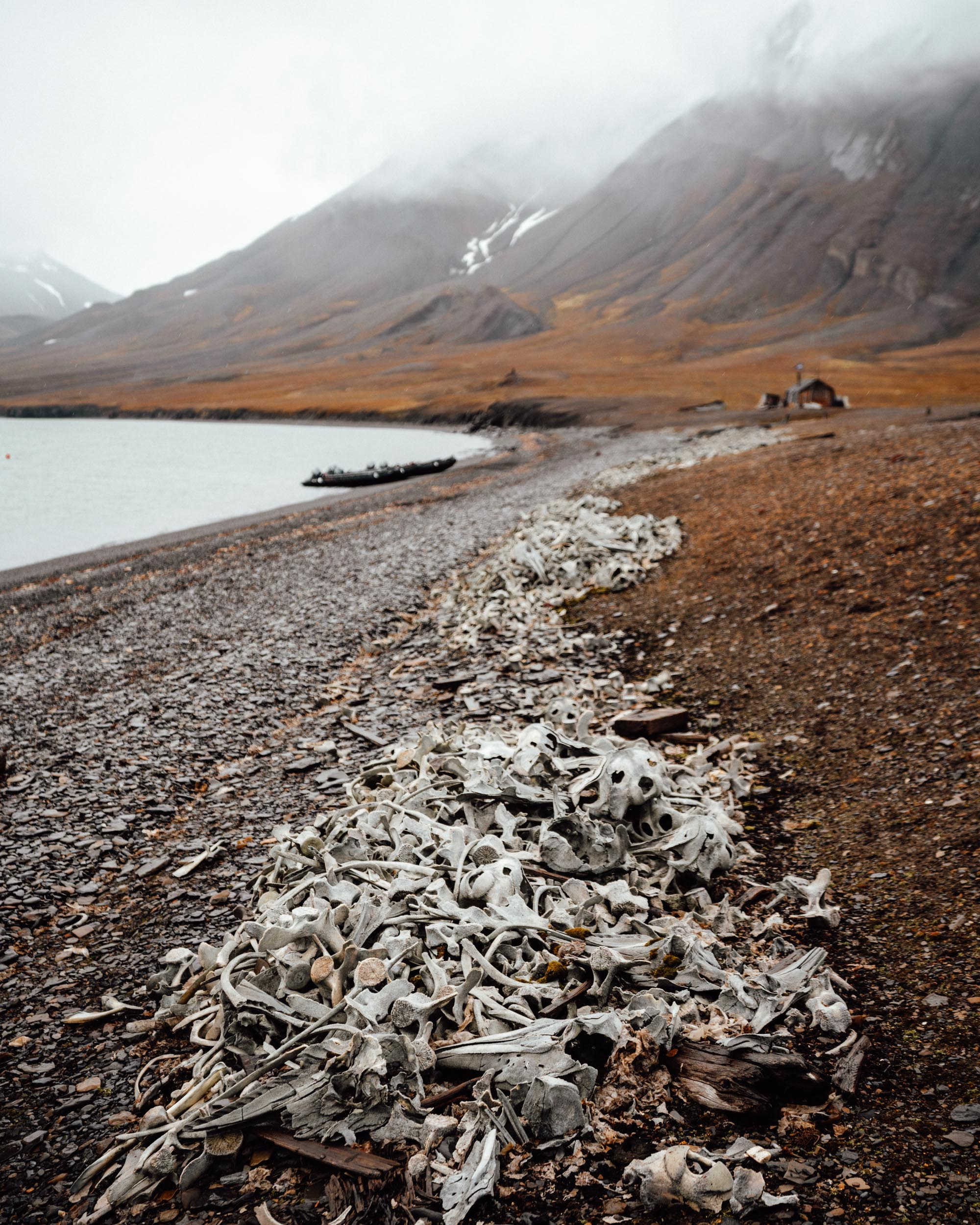 Recherchefjorden beluga whale watching research station in Svalbard, Spitsbergen, Norway