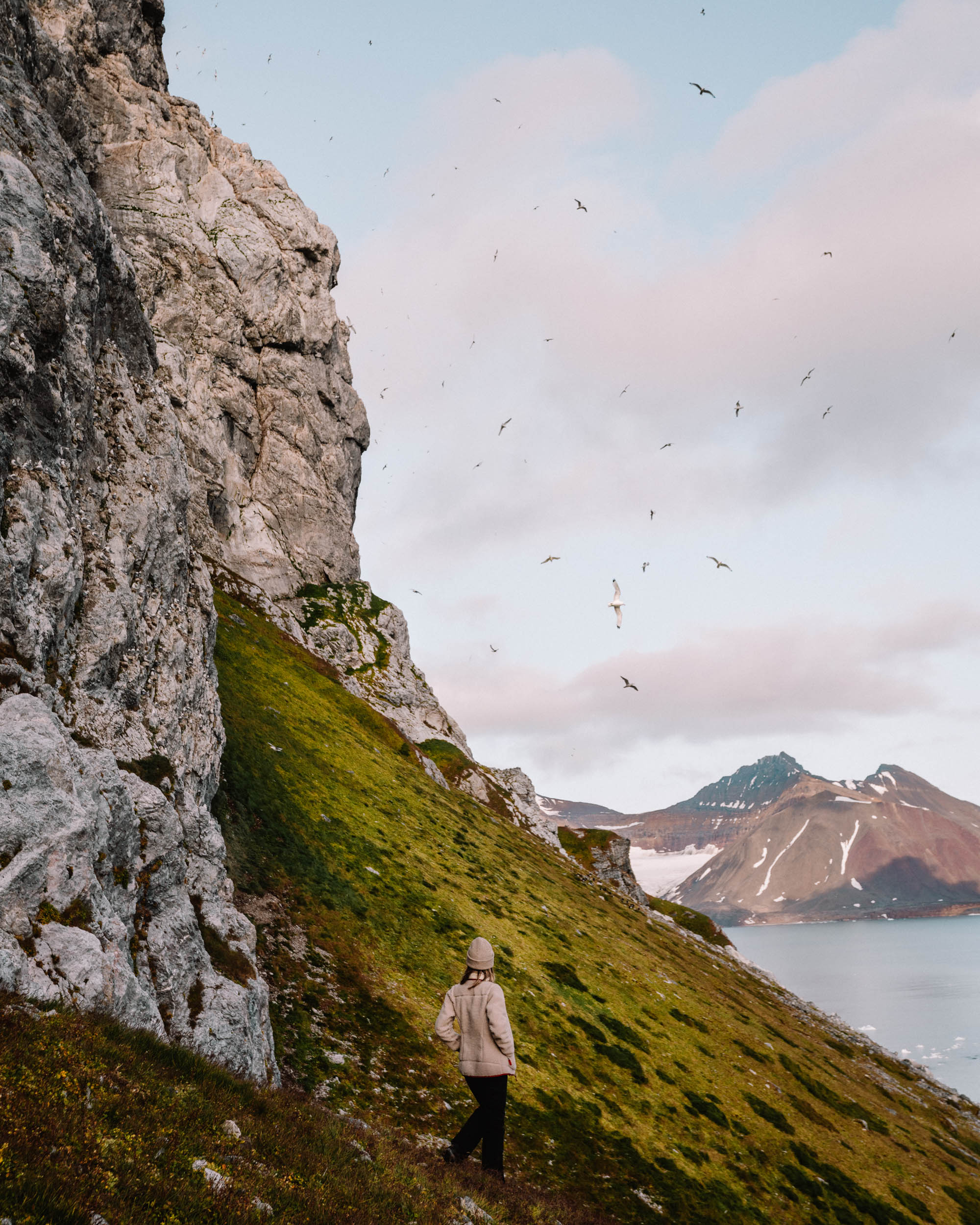 Bird cliffs in Svalbard, Spitsbergen, Norway