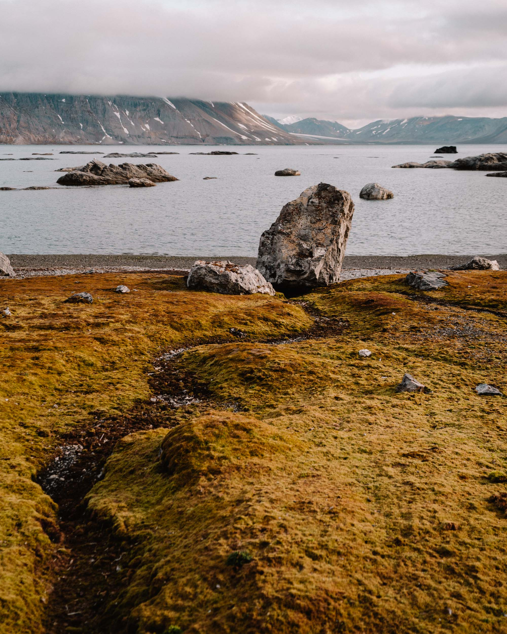 Flora and fauna in Svalbard, Norway