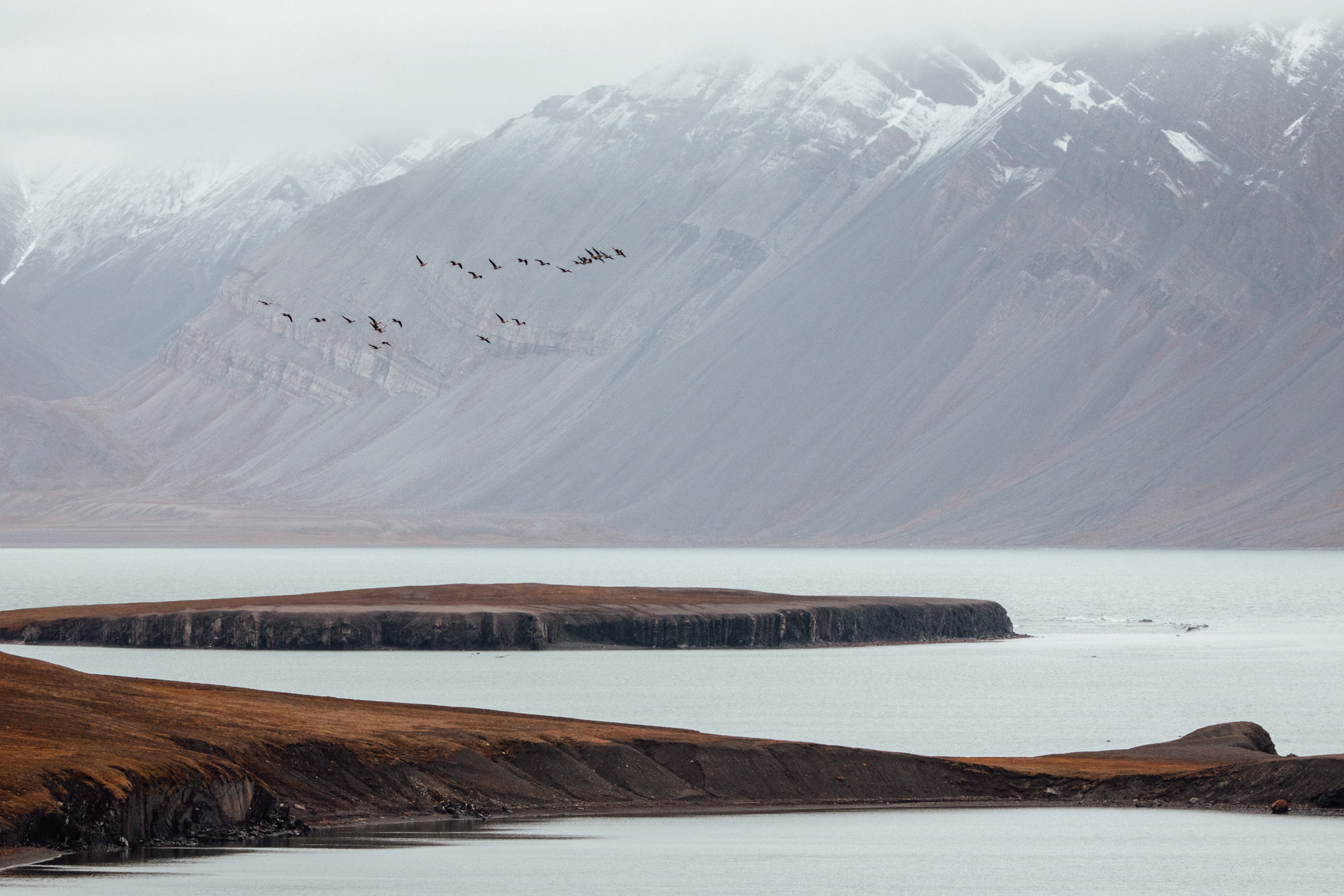 Birds and mountains in Svalbard, Spitsbergen, Norway