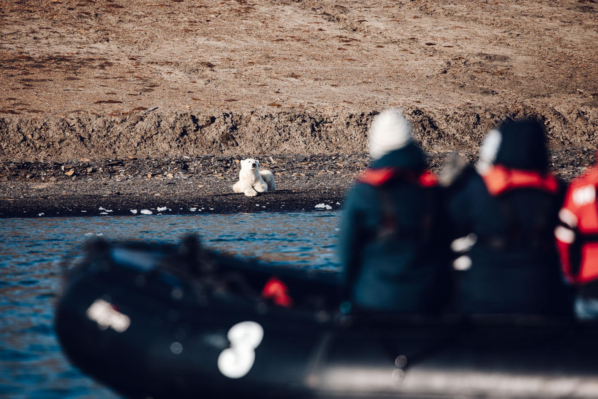 Polar bear from the polarquest zodiac boat in Spitsbergen, Svalbard, Norway
