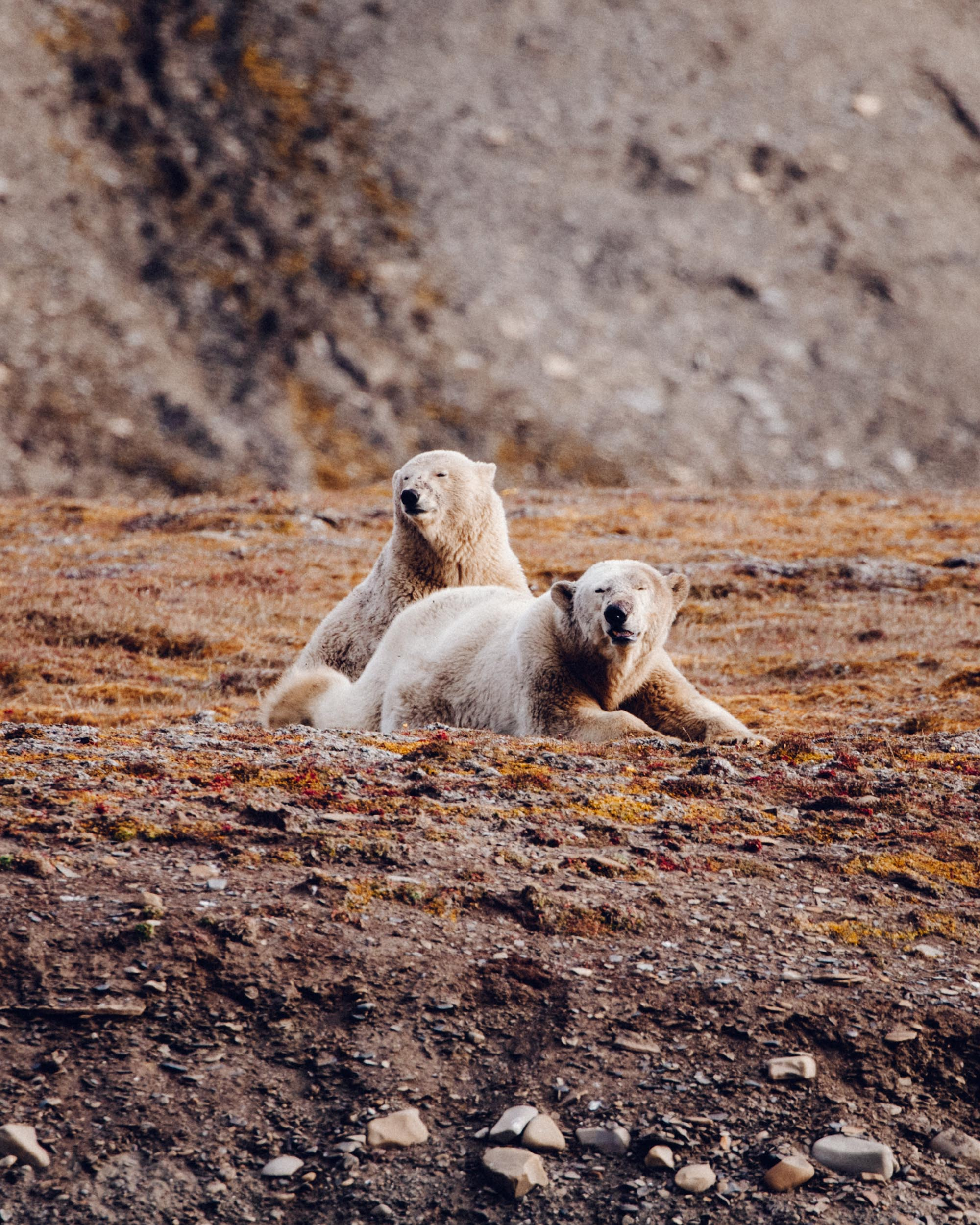 Mother Polar bear and polar bear cub in Spitsbergen, Svalbard, Norway