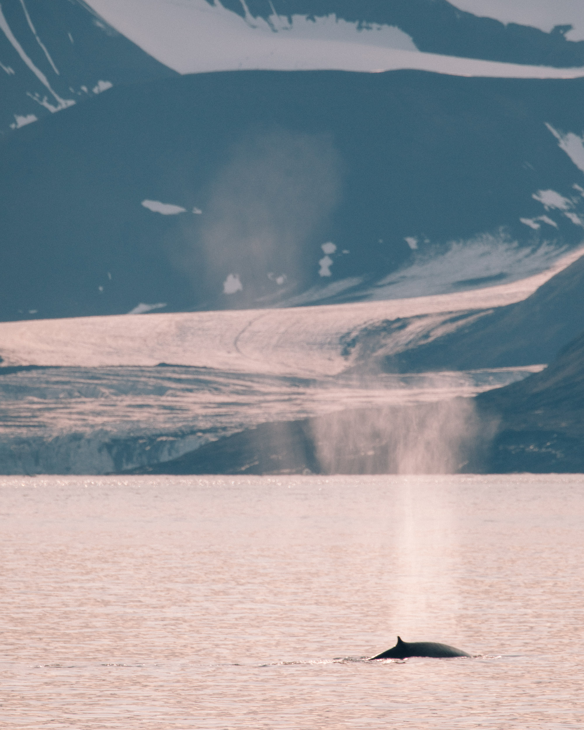 Whales in front of a glacier in Svalbard, Spitsbergen, Norway