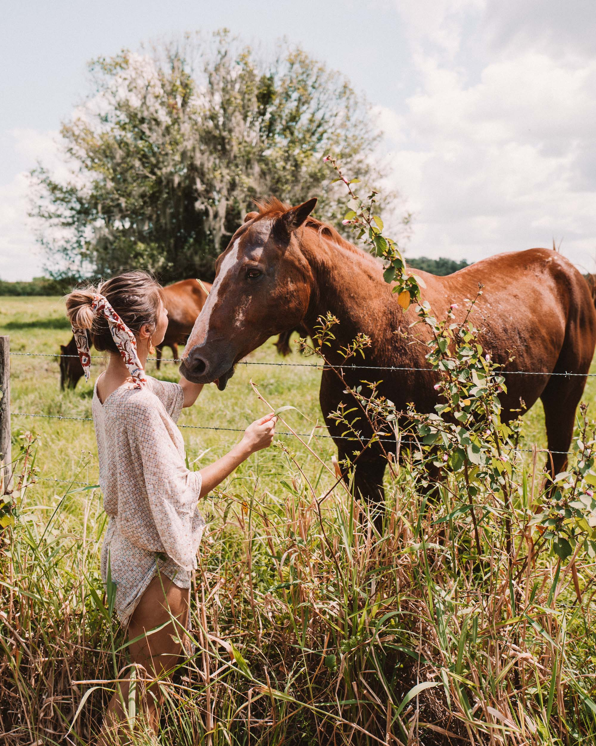 Horses in Kissimmee Florida