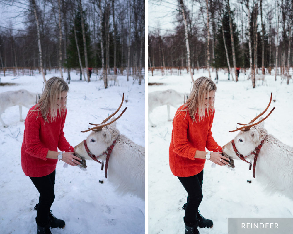 Reindeer - Find Us Lost Winter Preset Collection for Lightroom