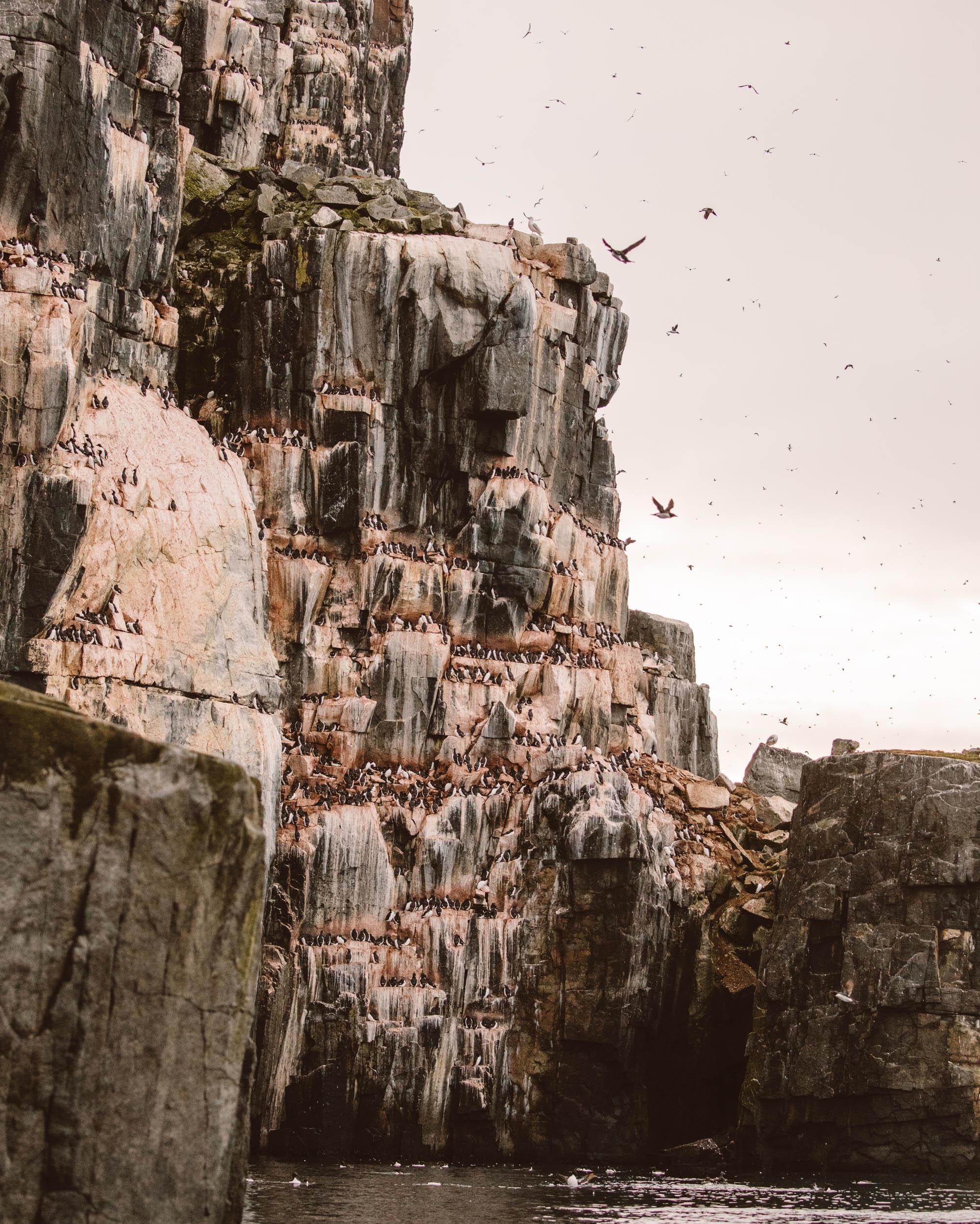 Alkefjellet bird cliffs Lomfjordhalvøya in Ny Friesland at Spitsbergen, Svalbard via Find Us Lost