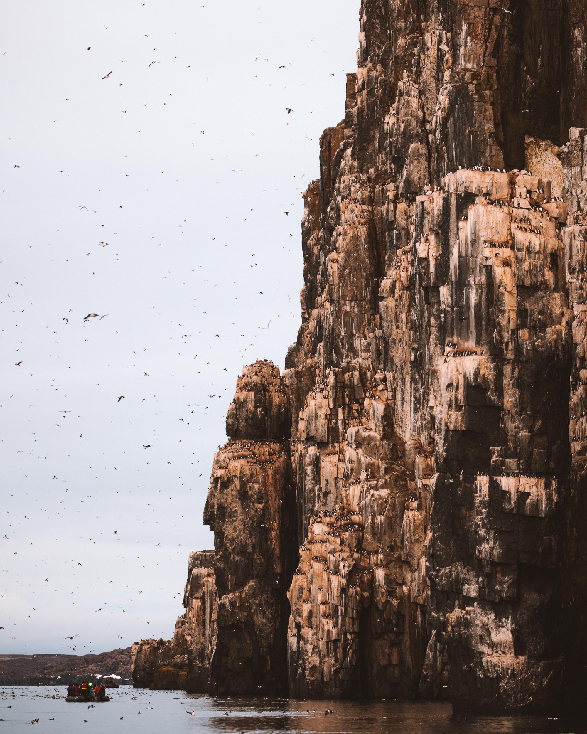 Alkefjellet bird cliffs Lomfjordhalvøya in Ny Friesland at Spitsbergen, Svalbard