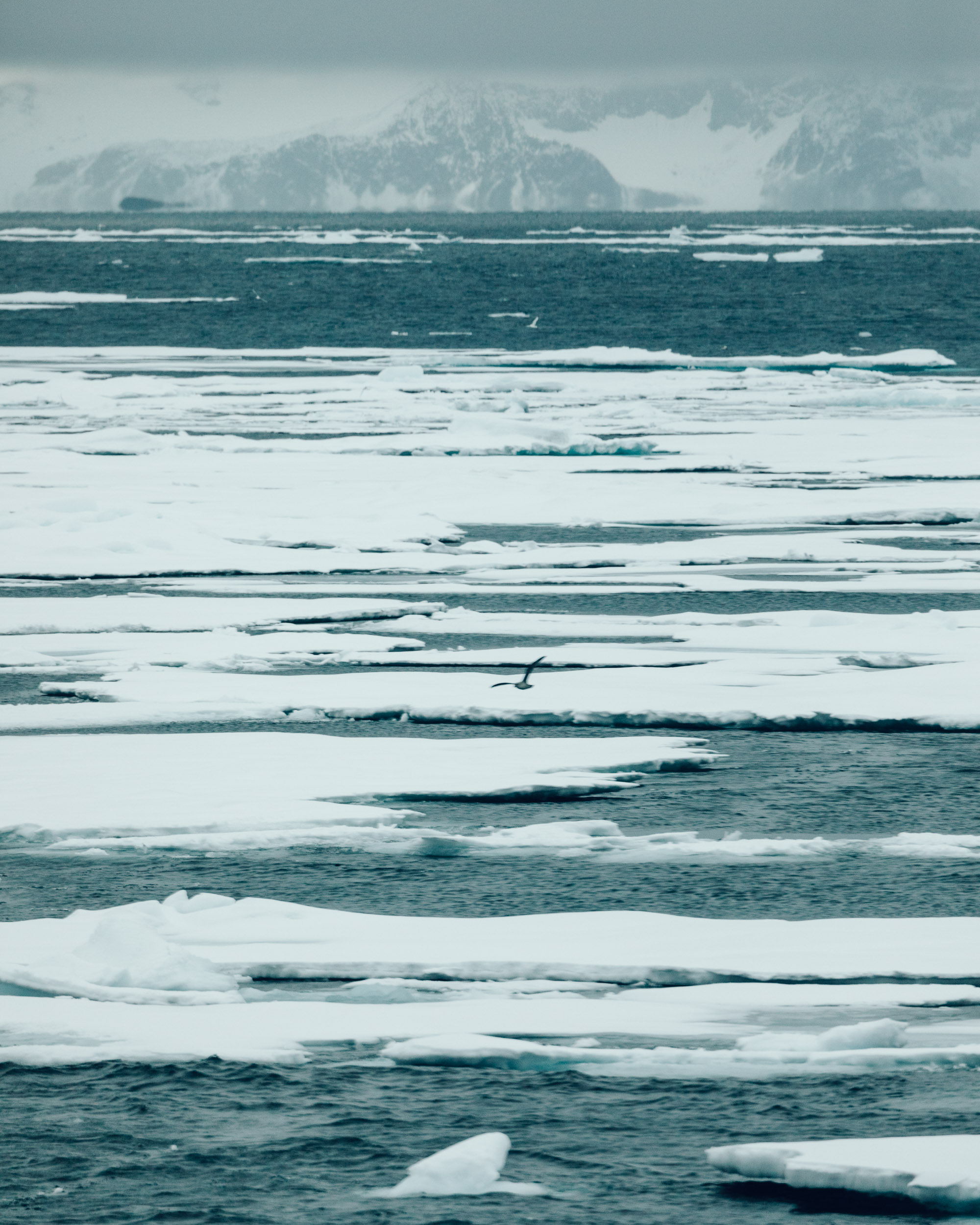 Ice floats in the arctic ocean of Svalbard via Find Us Lost