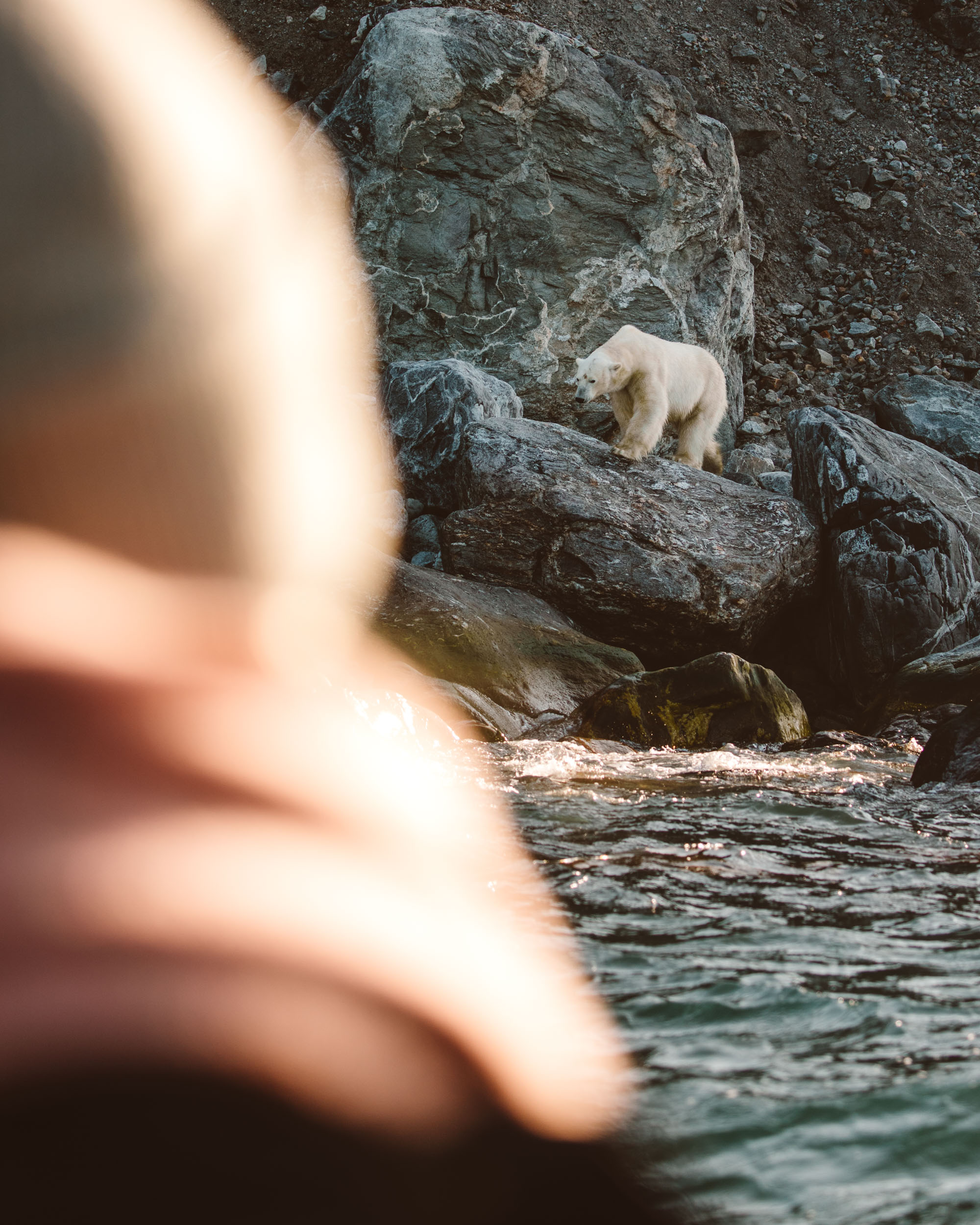 Polar bear near Virgohamna Spitsbergen via Find Us Lost
