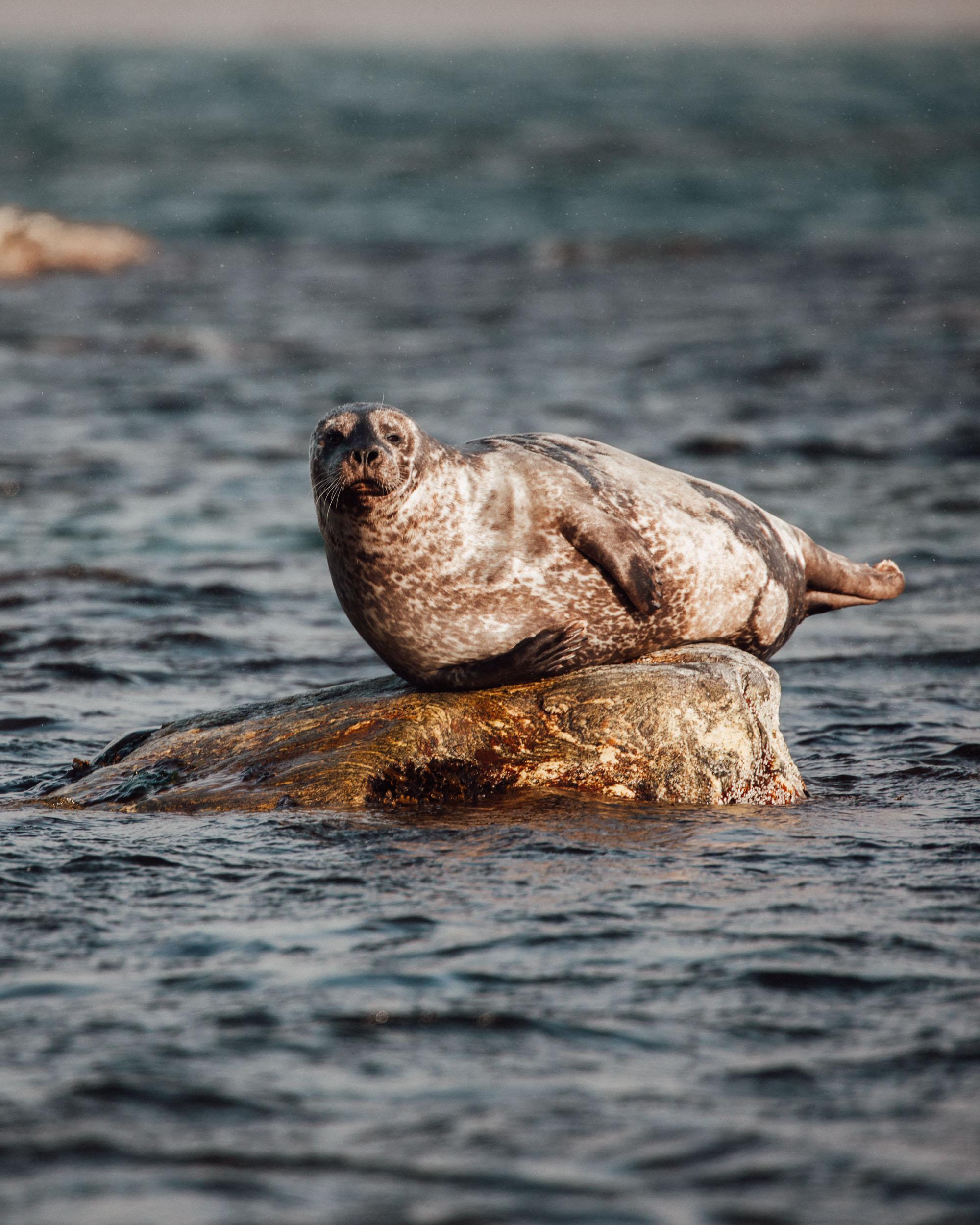 Seal in Virgohamna Spitsbergen via Find Us Lost