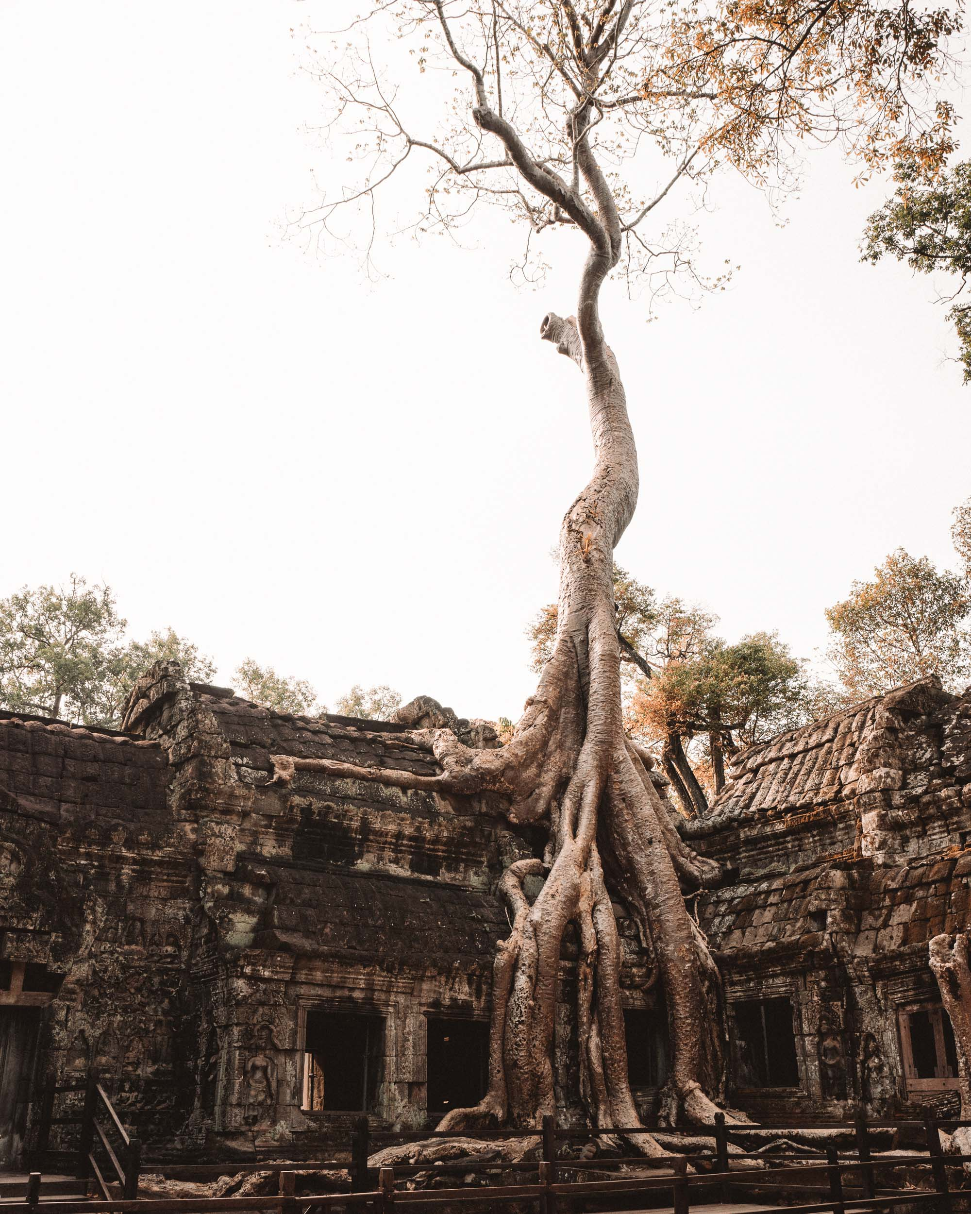 Ta Prohm temple with trees in Angkor Wat Cambodia