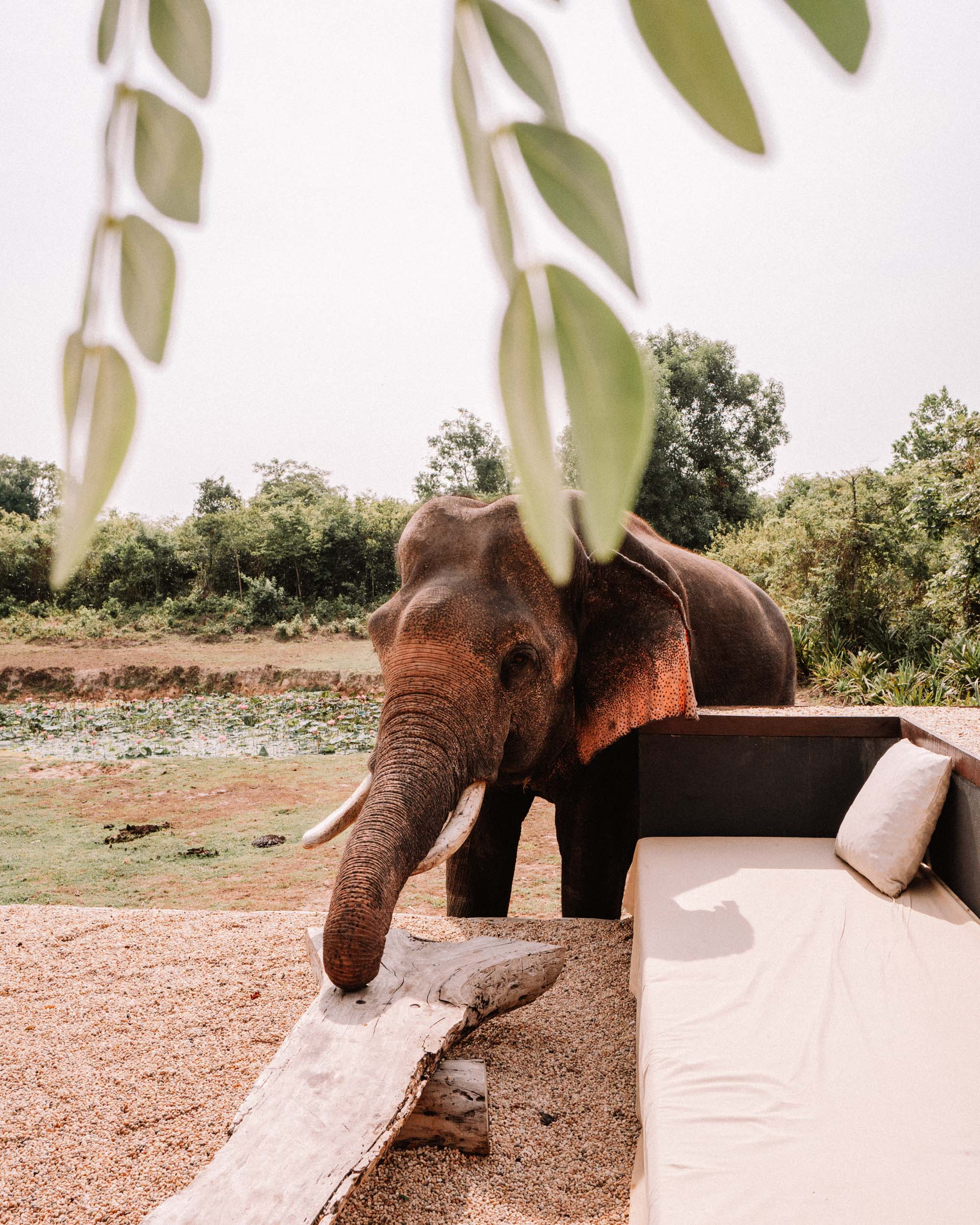Elephant in Siem Reap Cambodia