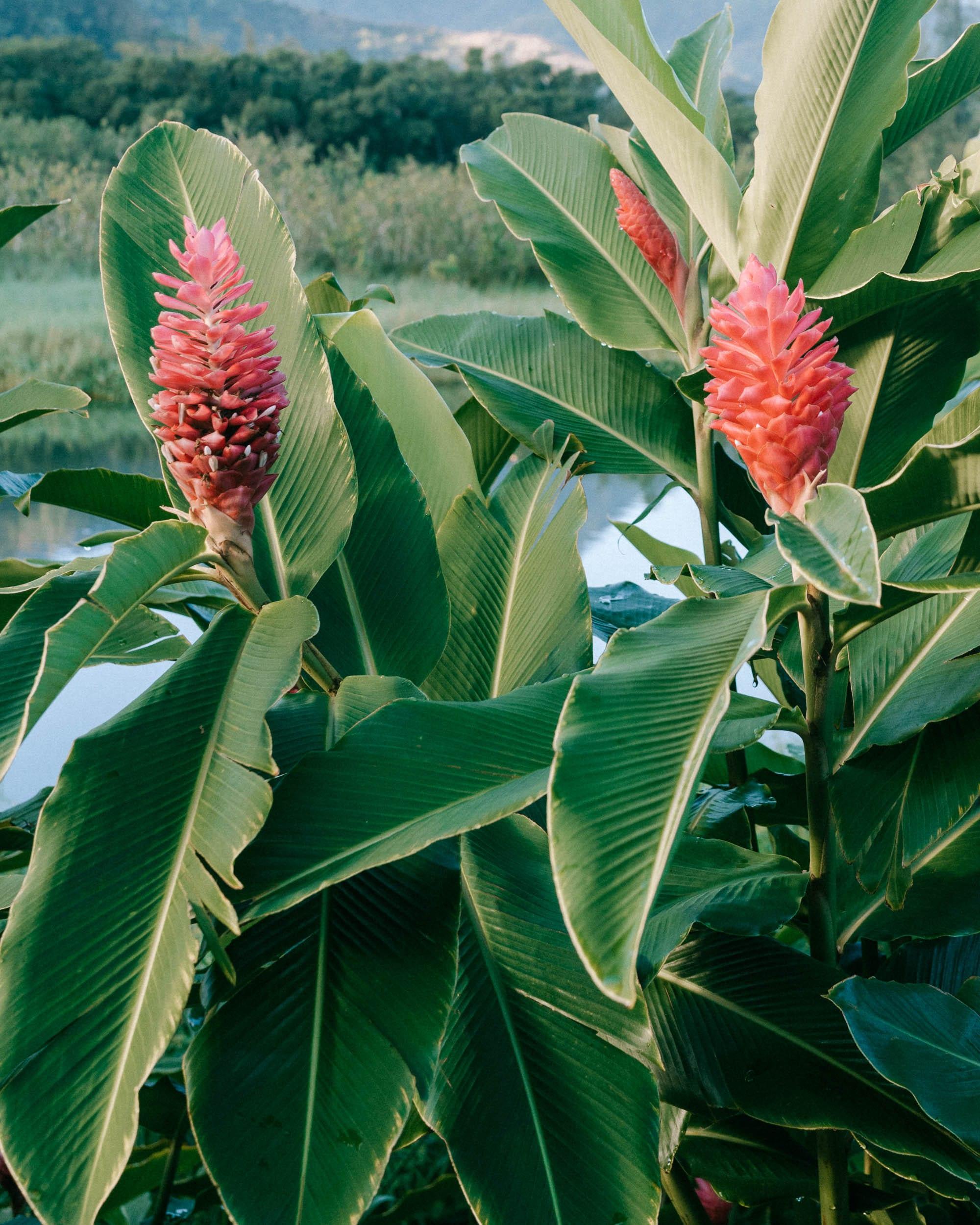 Flowers in Kauai Find Us Lost