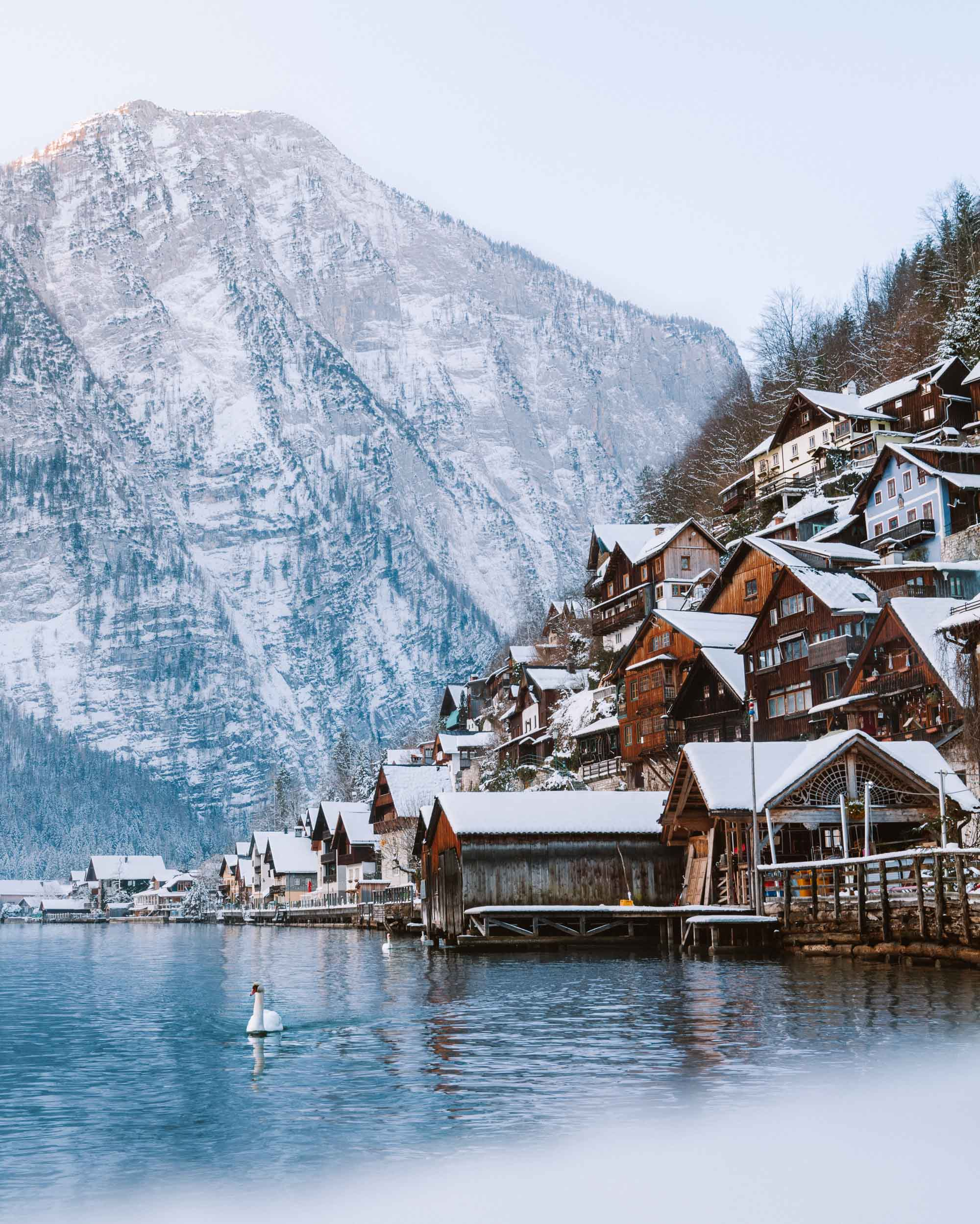 Houses on the mountain in Hallstatt Austria with swans in the lake