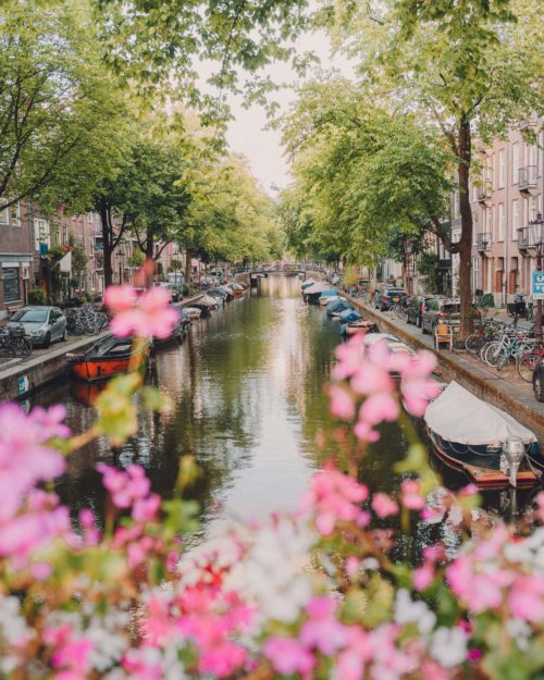 Amsterdam Jordaan in summer with pink flowers on the canals