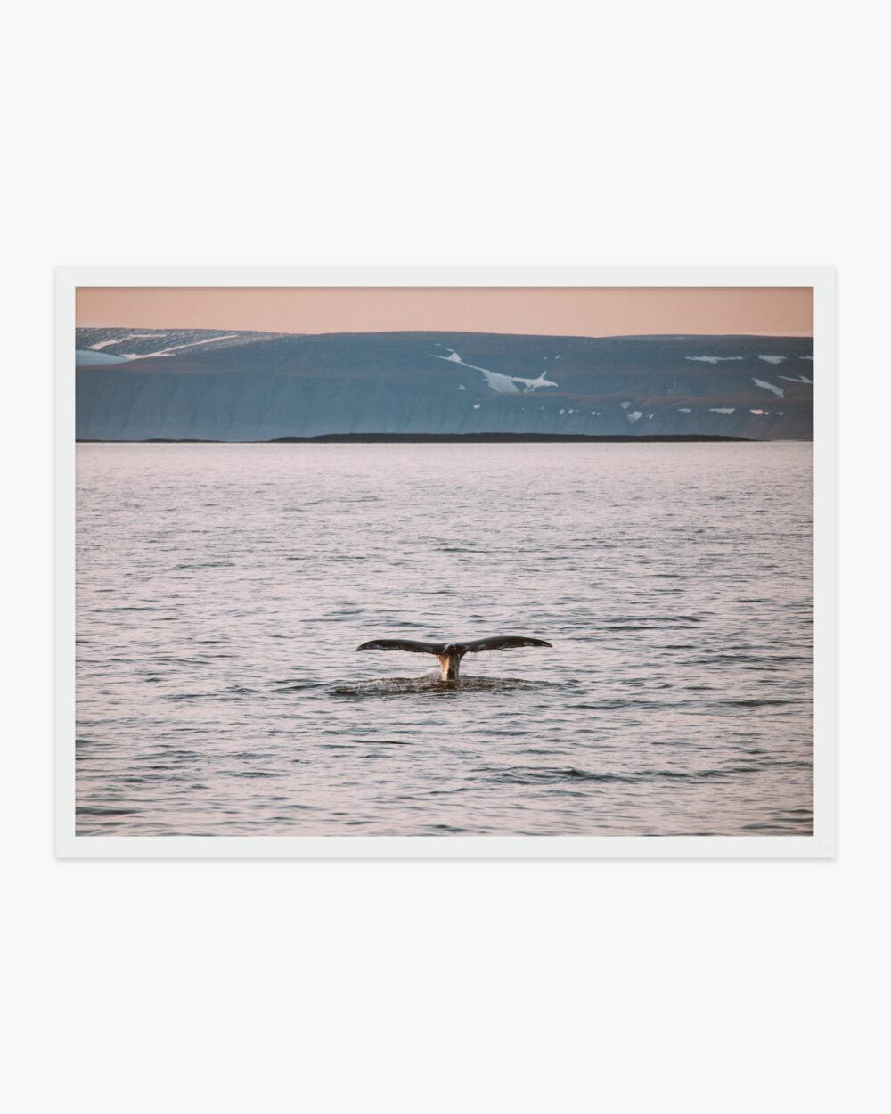 Svalbard Whale Find Us Lost Prints